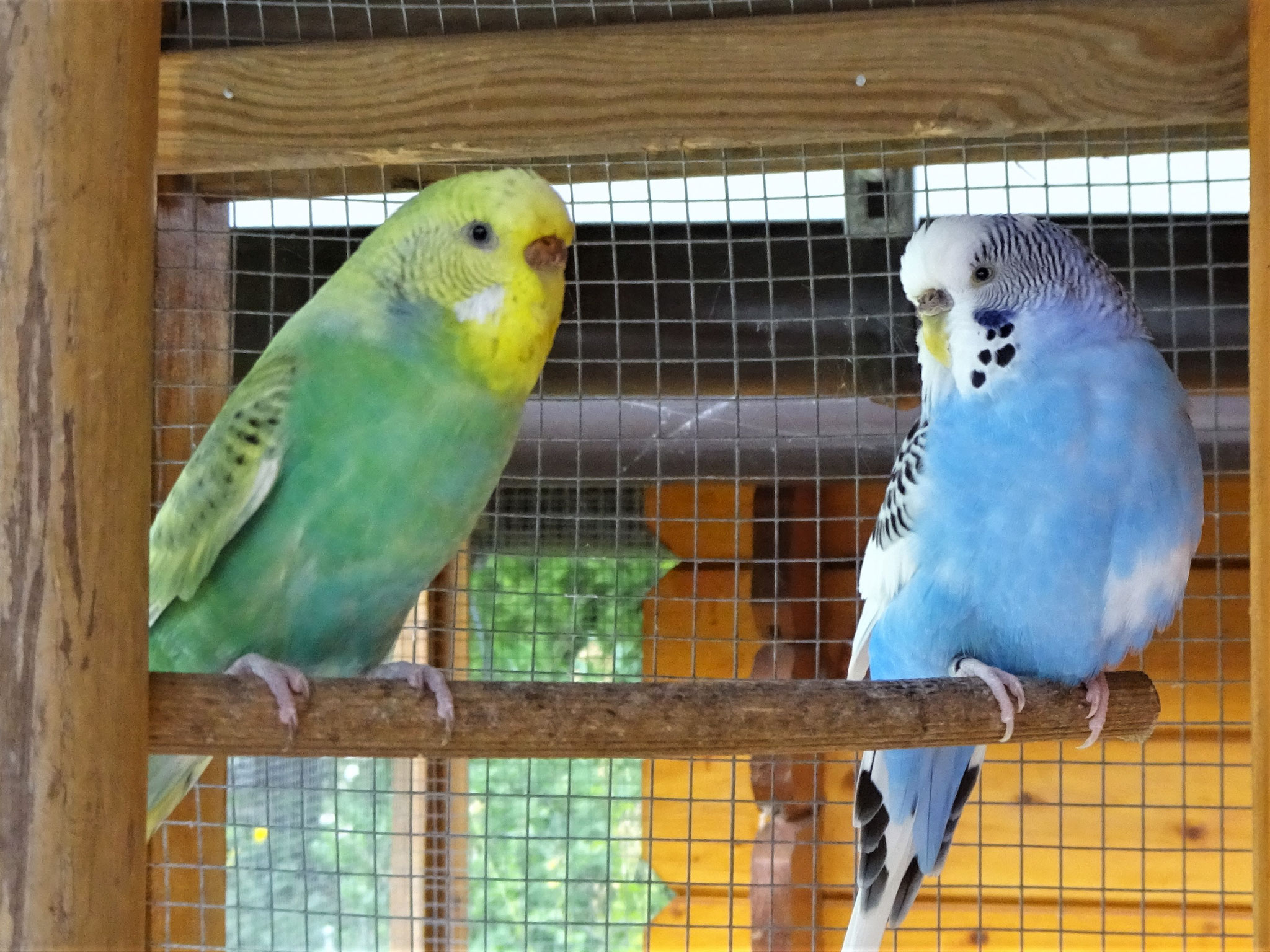 Feli und Joline