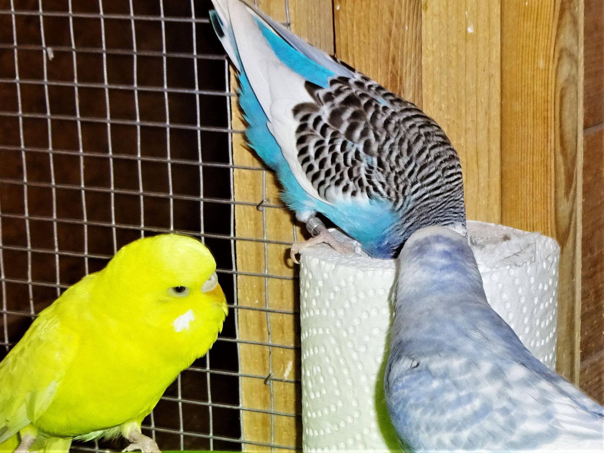 Pepe, Joline und Monty