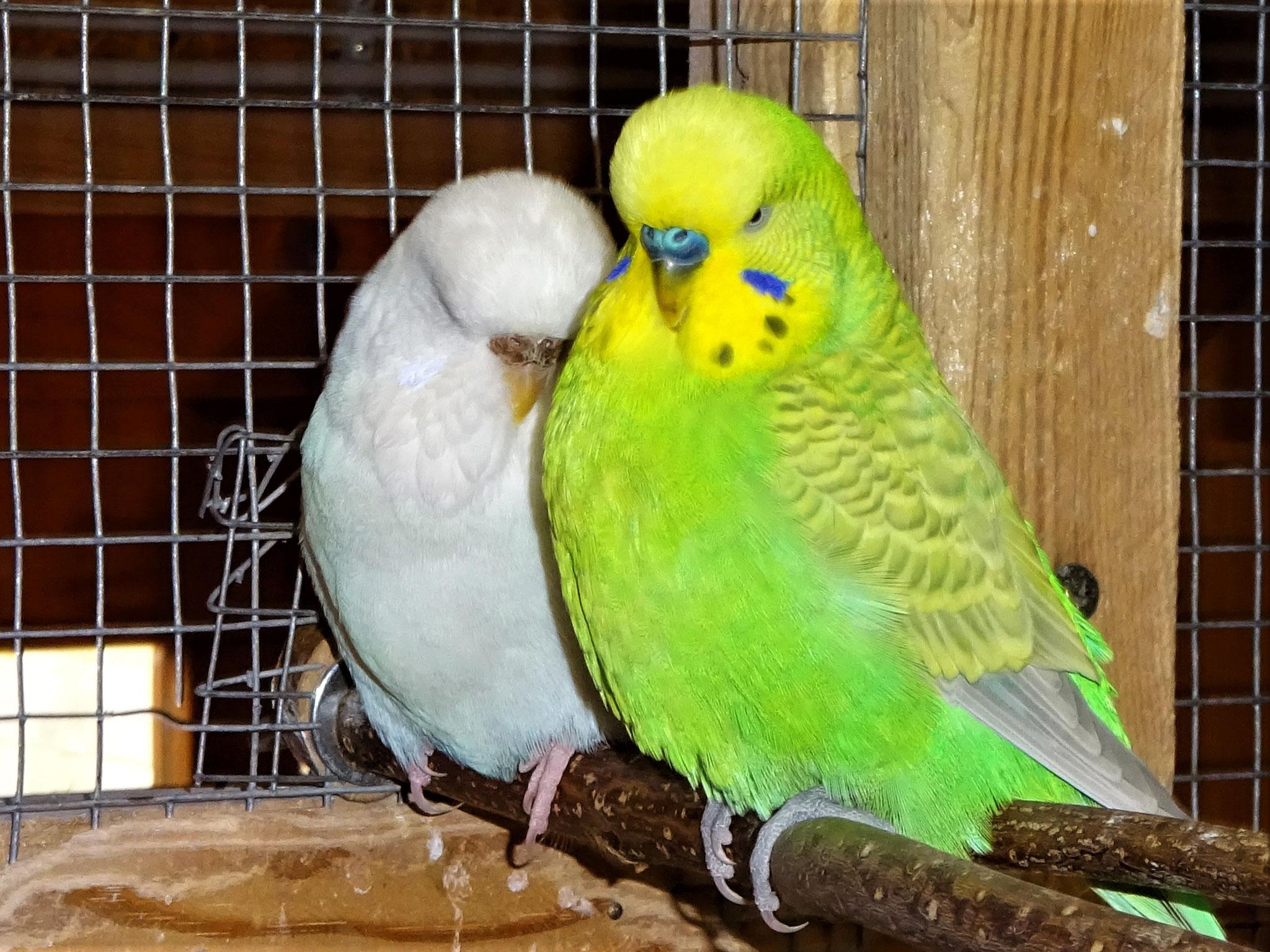 Cleo und Filou