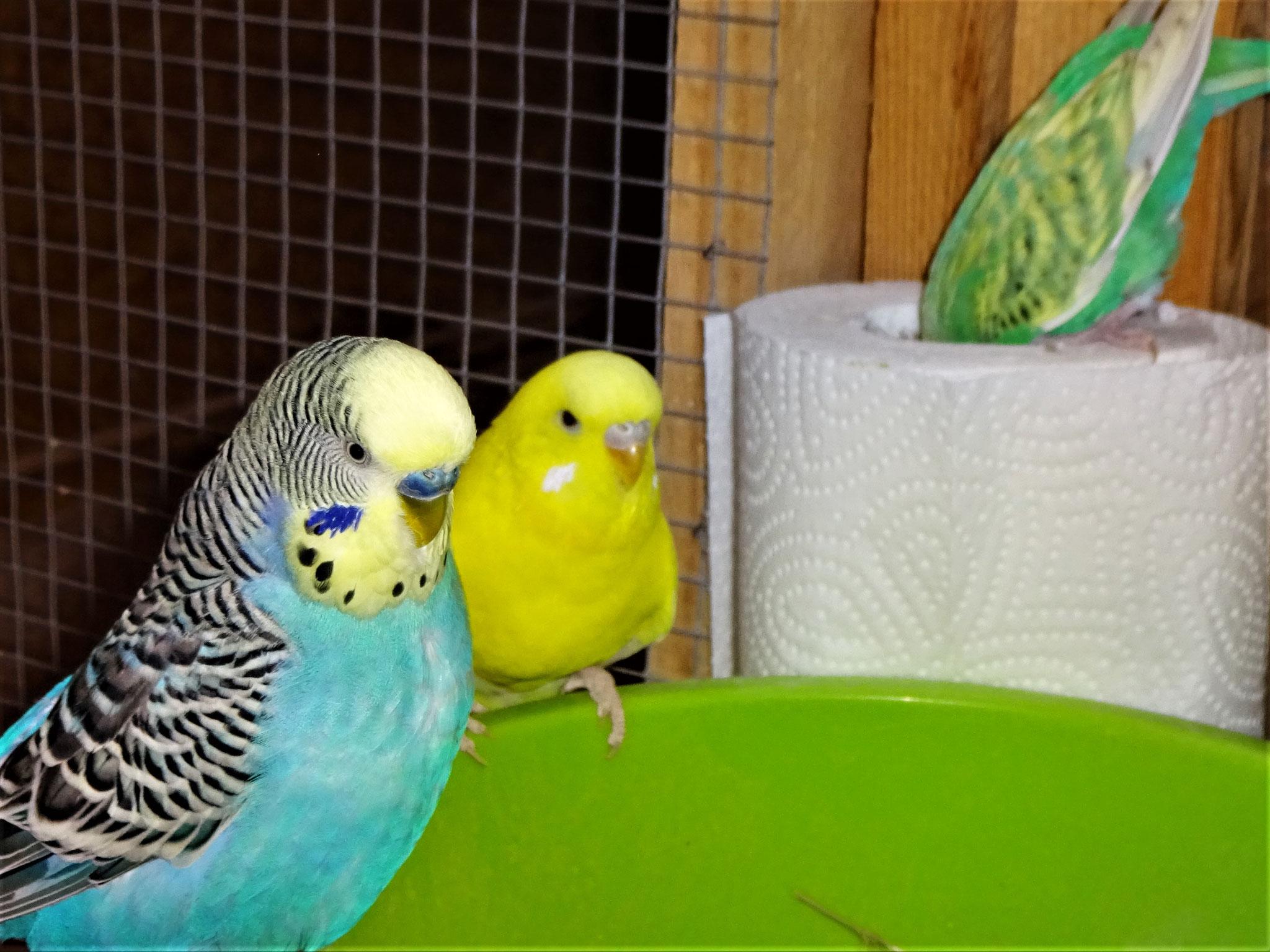 Jordy, Pepe und Feli