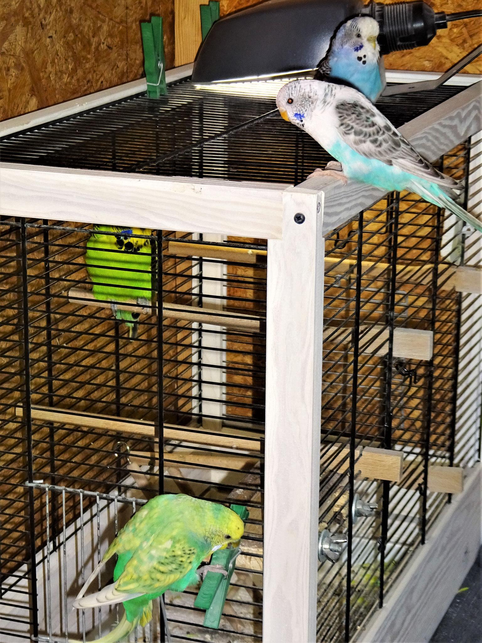 Bosse hat Besuch von Joline, Pearly und Feli