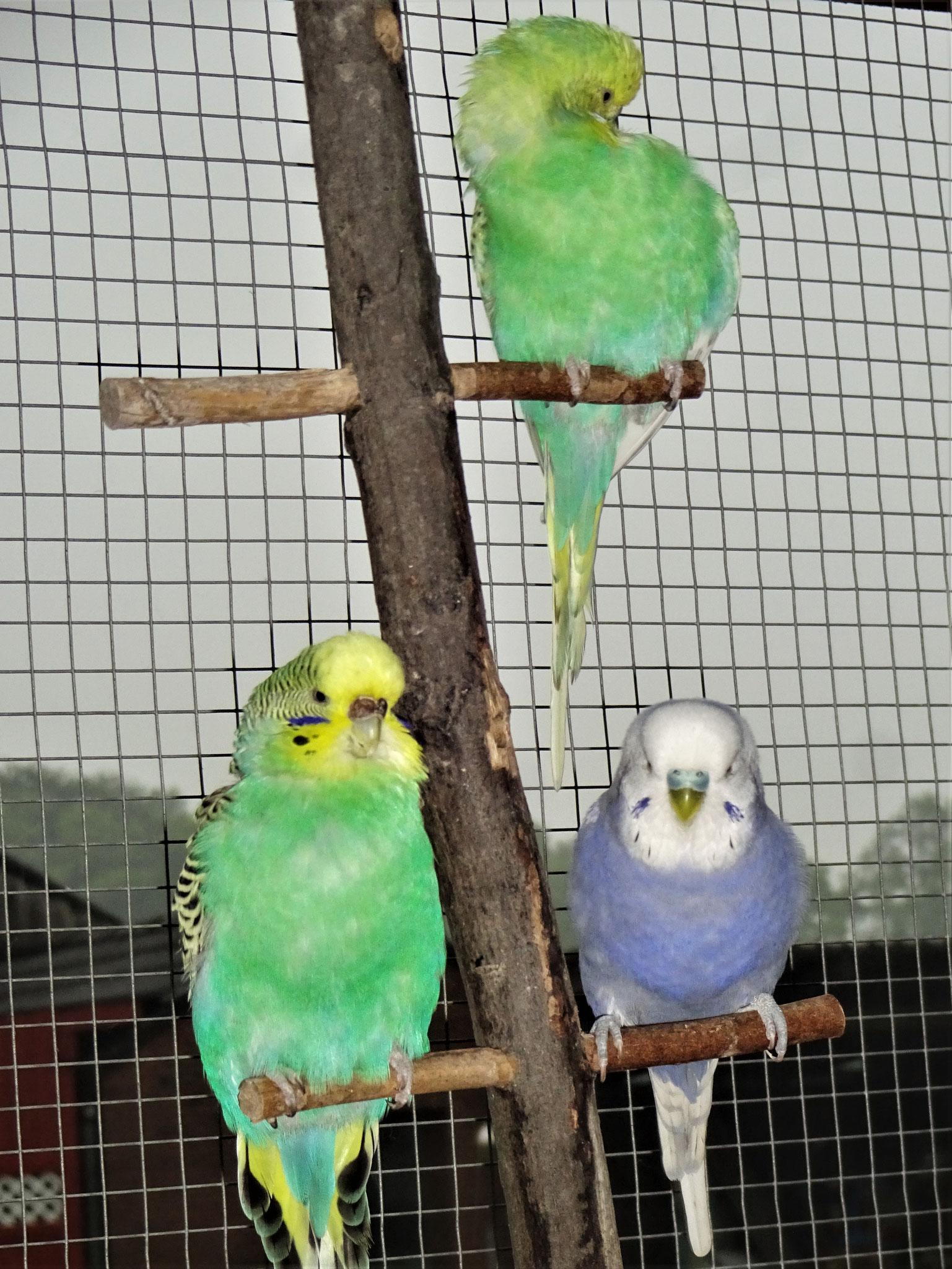 Feli, Lotte, Monty