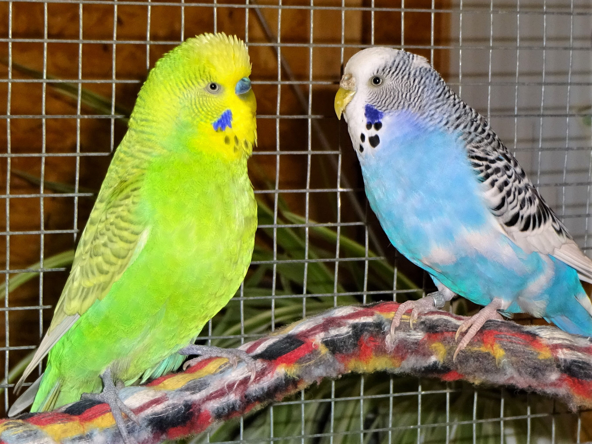 Filou und Joline