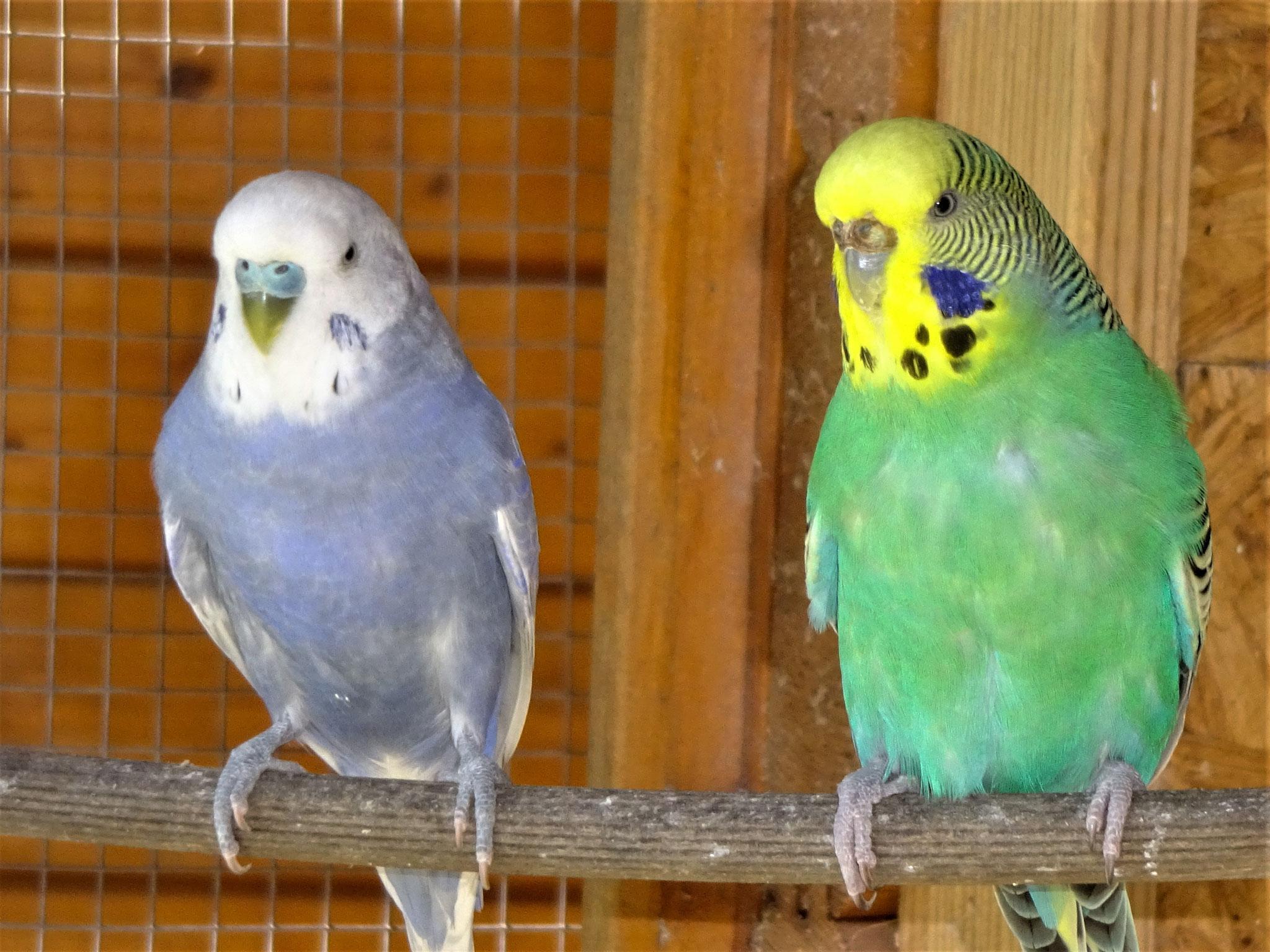 Monty und Lotte