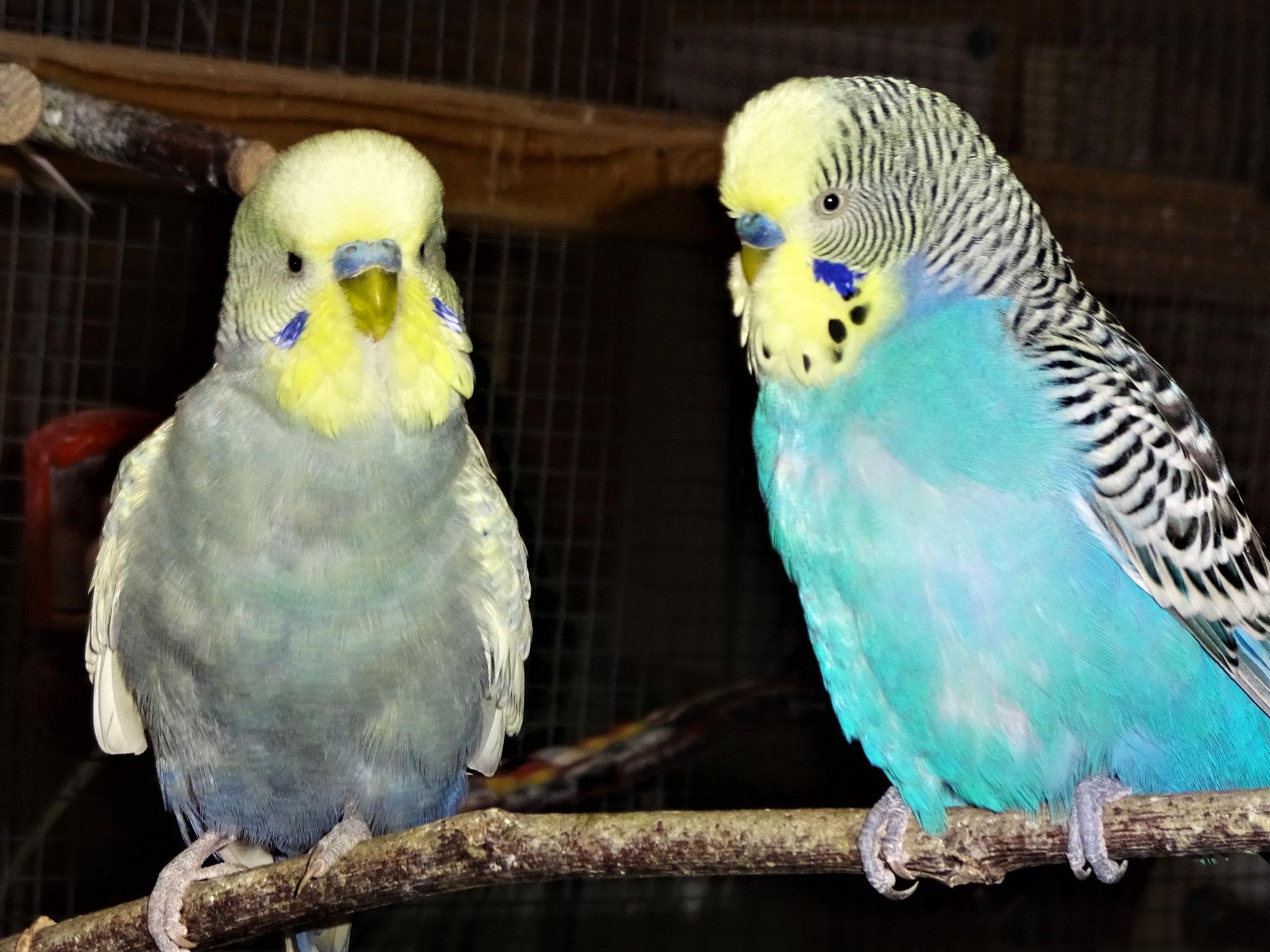 Leroy und Jordy