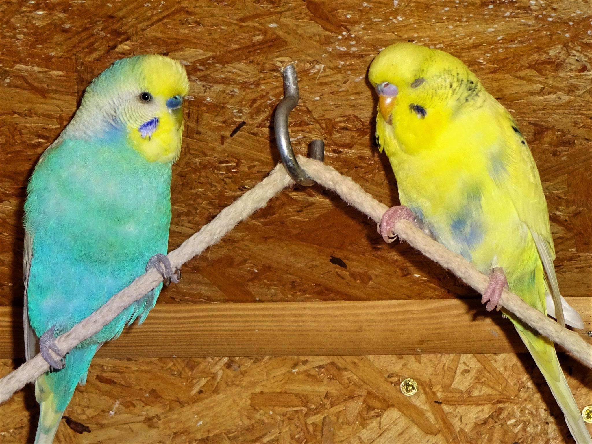 Flo und Tommy