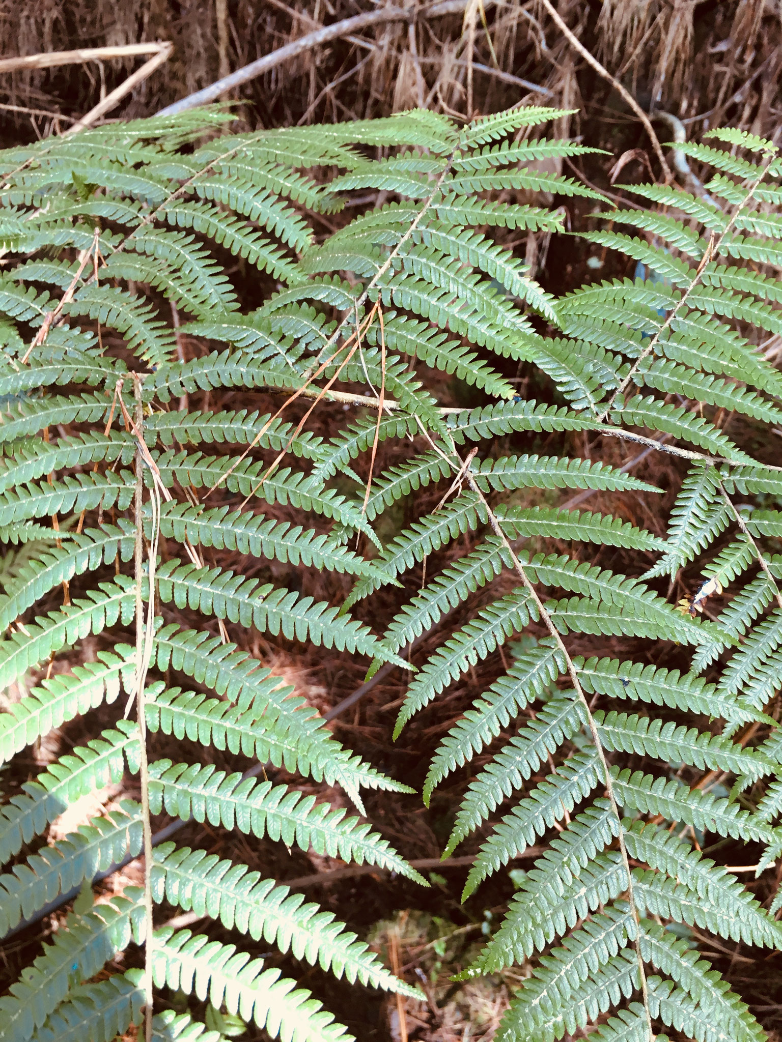 We saw lots of flora like this beautiful fern and talked about the koru pattern.