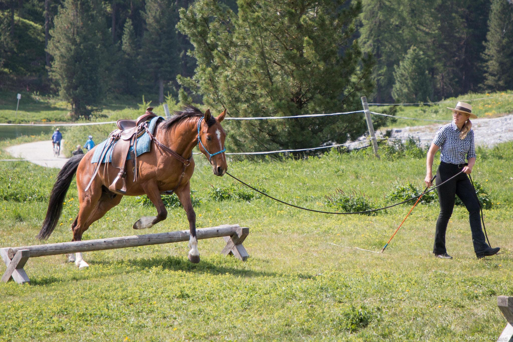 Horsemanship Bodenschule - als Anti-Angst-Programm und für Vertrauensaufbau