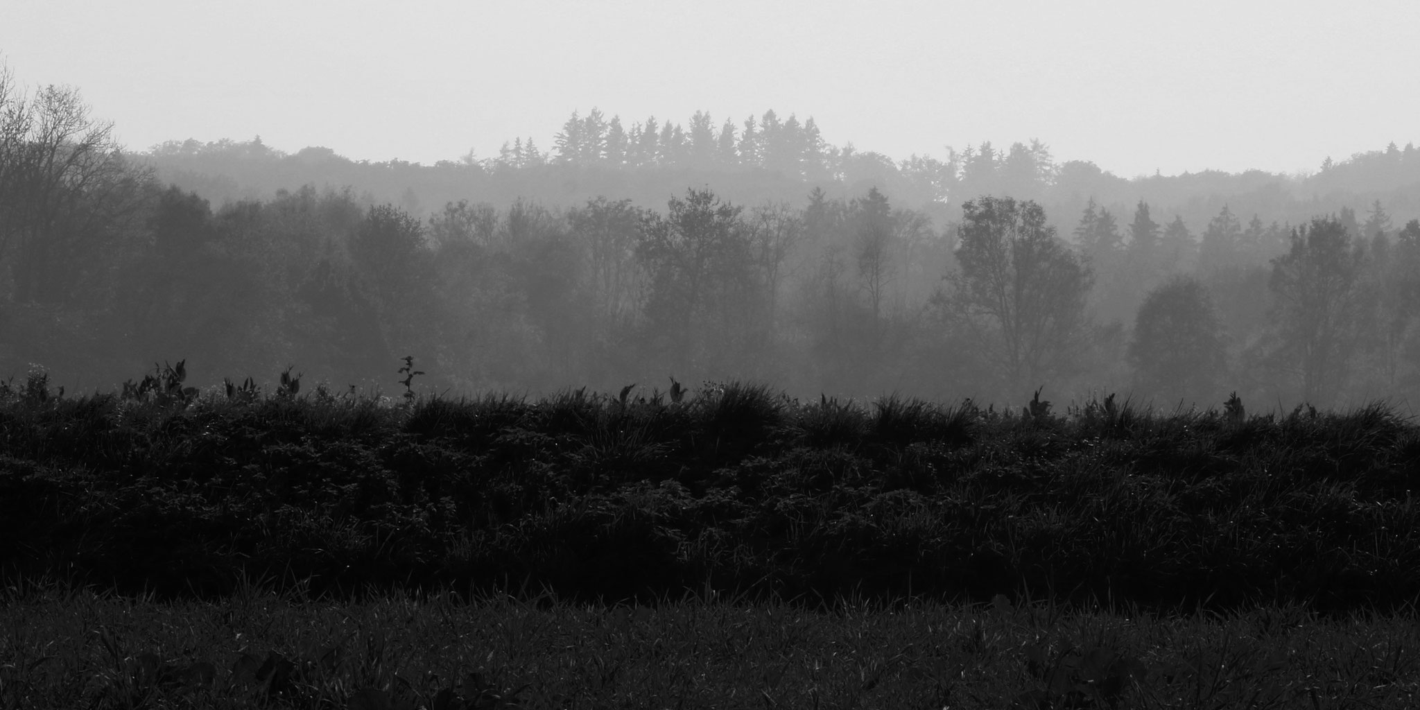 And the fog rising from the Würm transforms the forests into a fairytale landscape