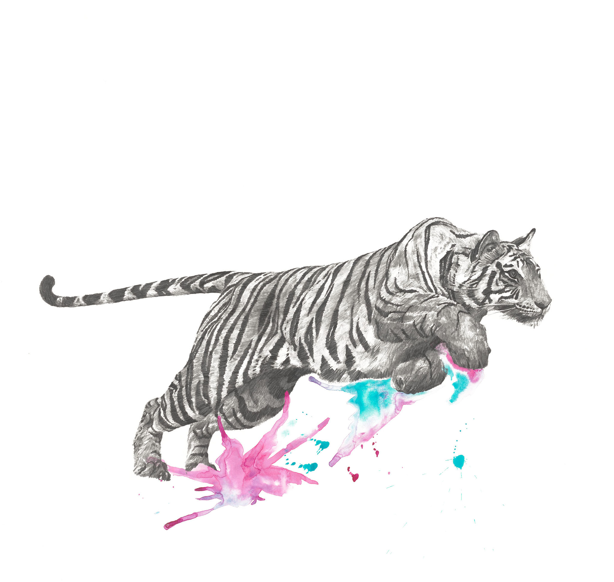 Bewegungsstudie Tiger III 70x70cm pencil, watercolor 2021