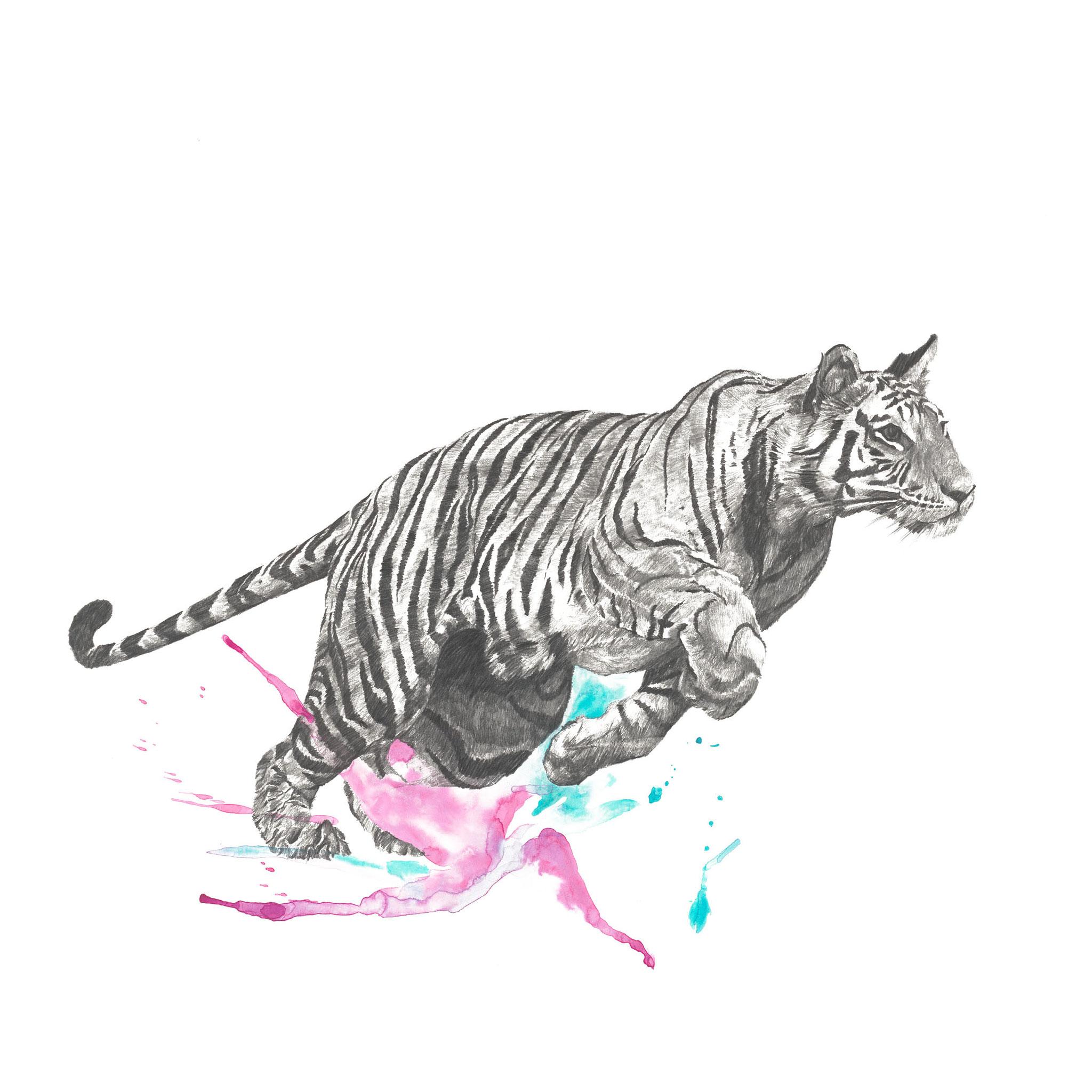 Bewegungsstudie Tiger II 70x70cm pencil, watercolor 2021