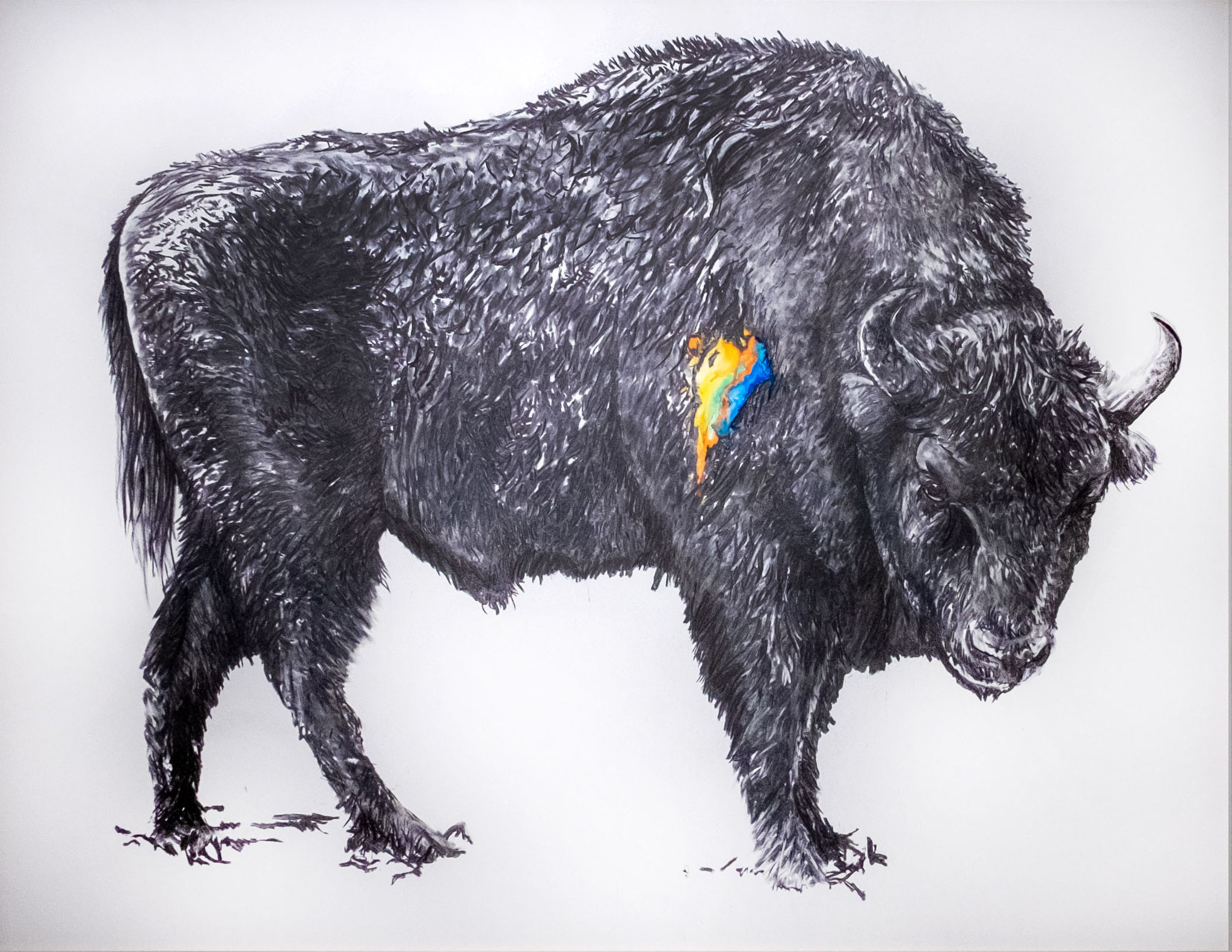 Wisent 140x180cm charcoal, watercolor 2021