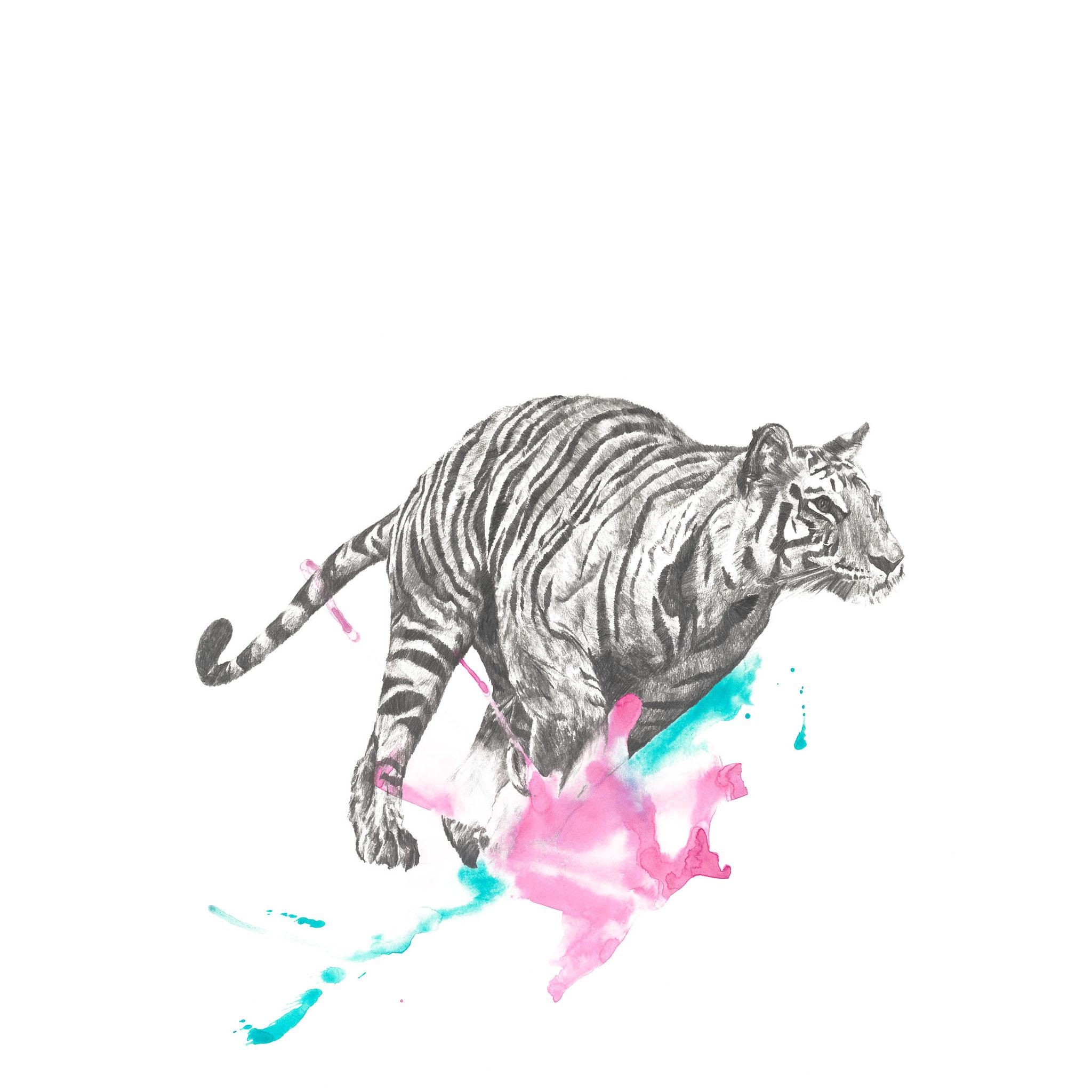 Bewegungsstudie Tiger I 70x70cm pencil, watercolor 2021