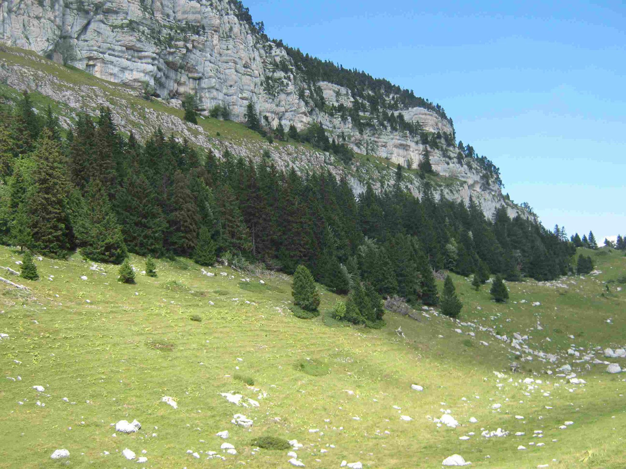 Plateau de l'Alpette