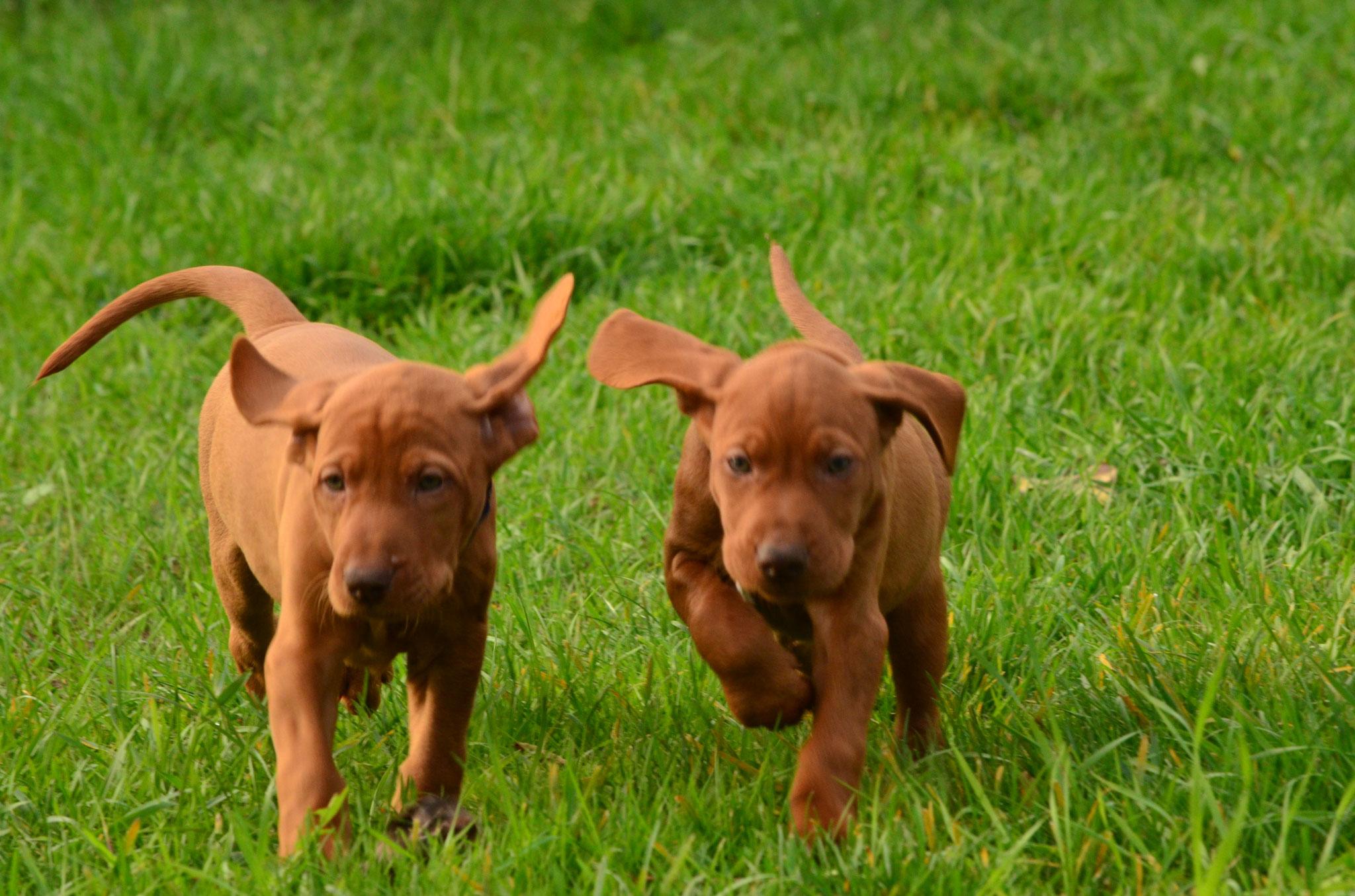 Q-pups
