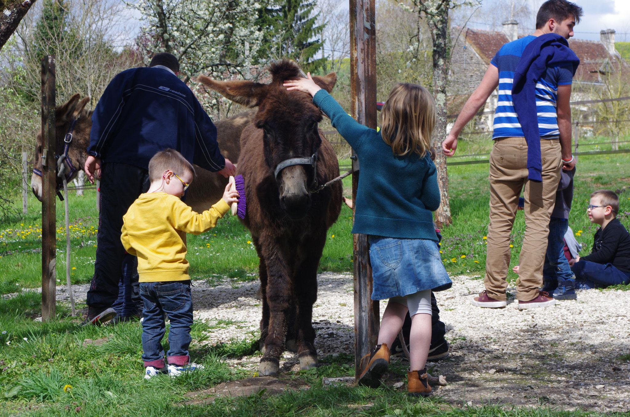 Les sens en éveil grâce à la médiation animale ou zoothérapie (Tours, Touraine, Indre et Loire).