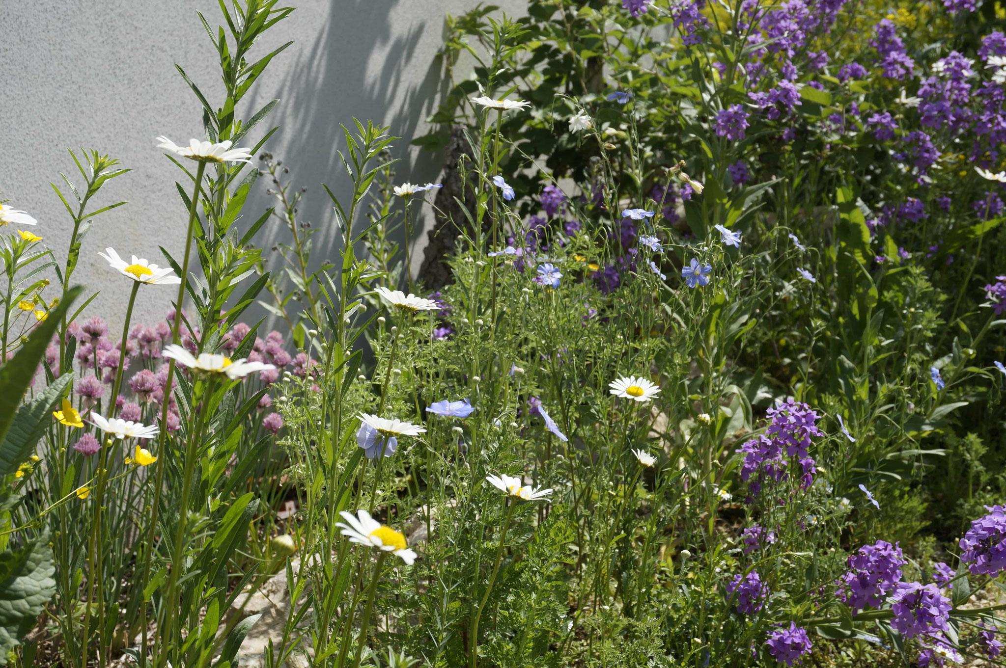 Wildblumen unter sich