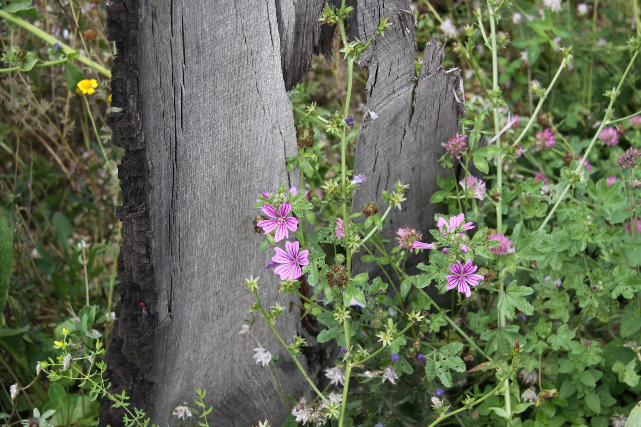 Totholz und wilde Malve