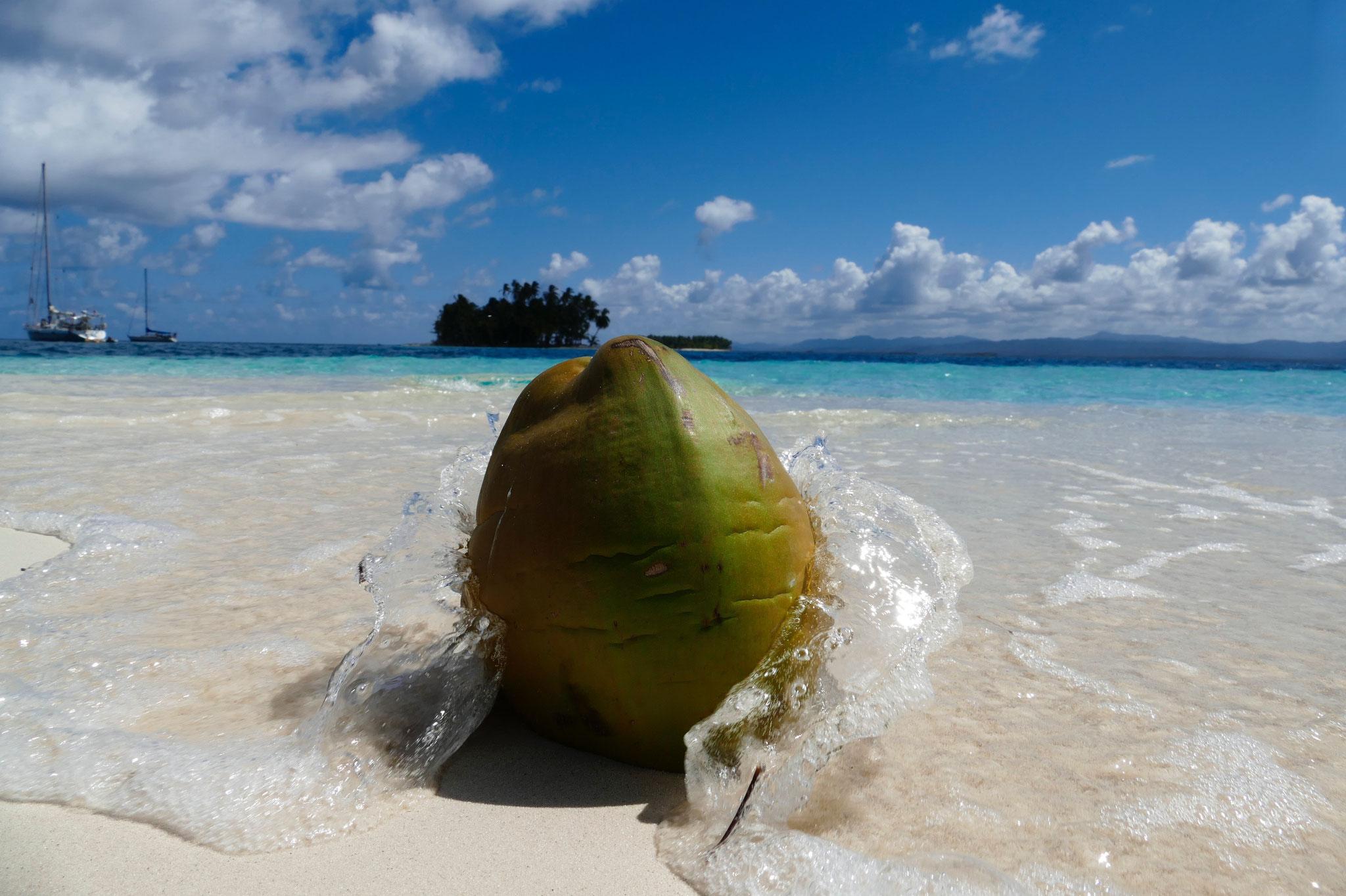 Die Kokosnüsse gelten bis heute als Zahlungsmittel auf einigen Inseln