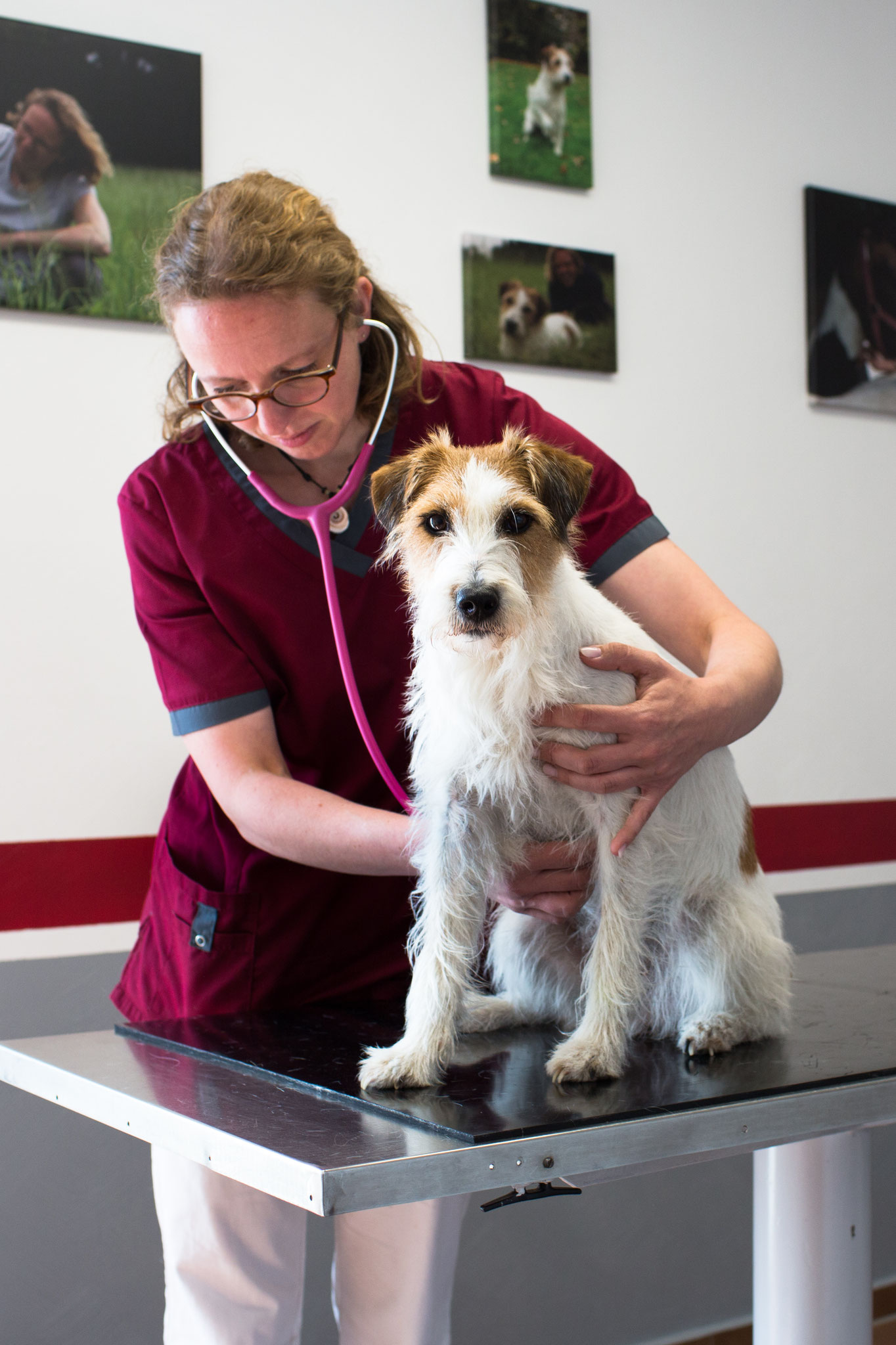 Praxishund Pippa demonstriert eine Behandlung