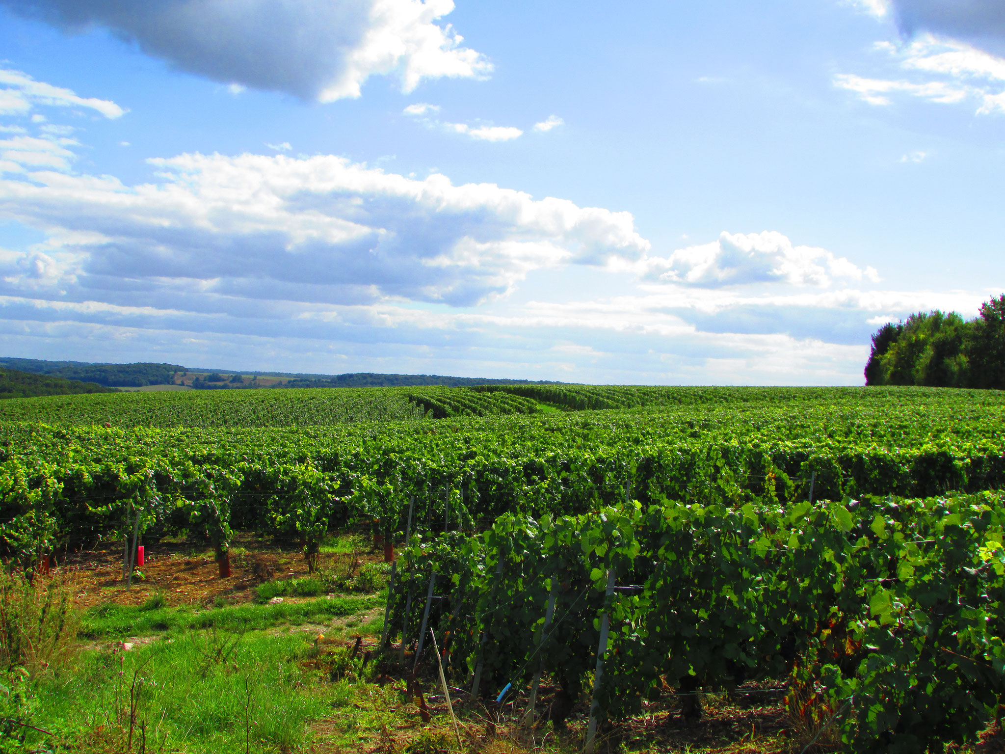 Our vineyard expand on 5 hectares