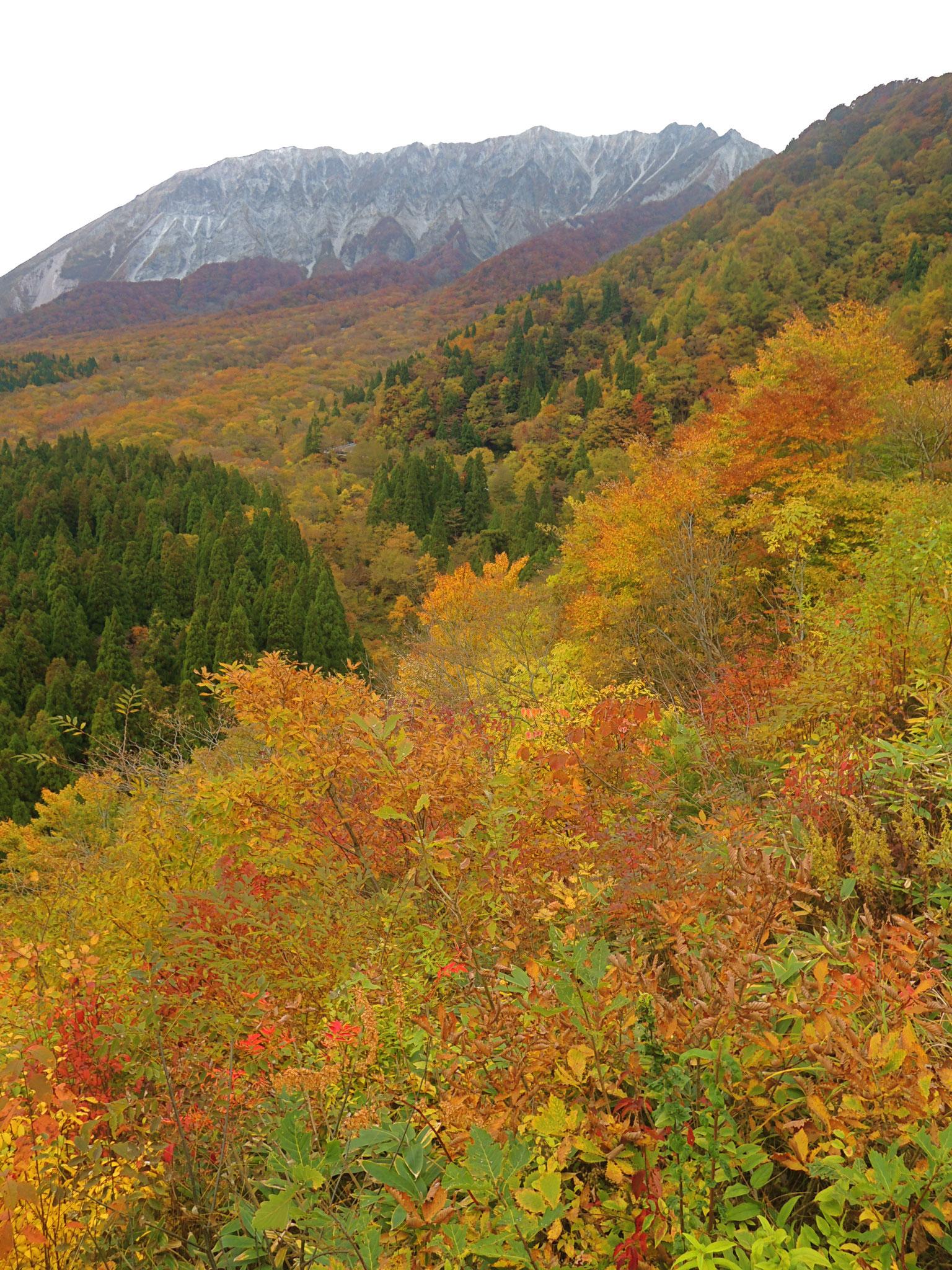 大山南壁、鍵掛峠(標高900m)より。