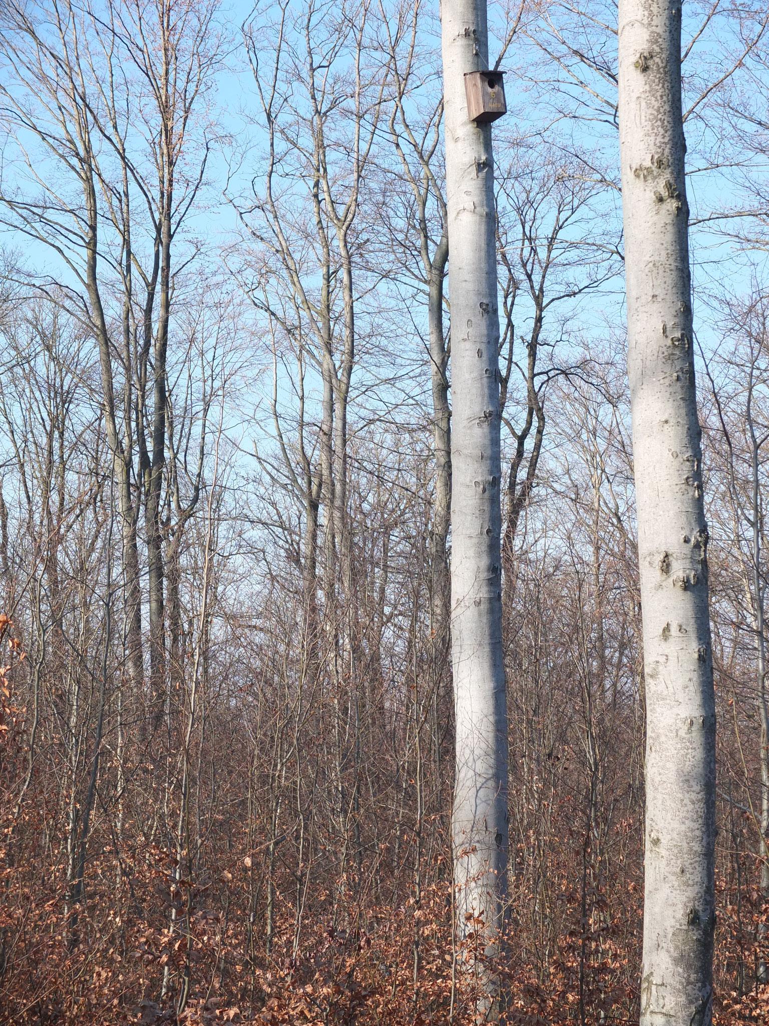 Foto: Winterlandschaft am Glemser Stausee - Albert Brodbeck