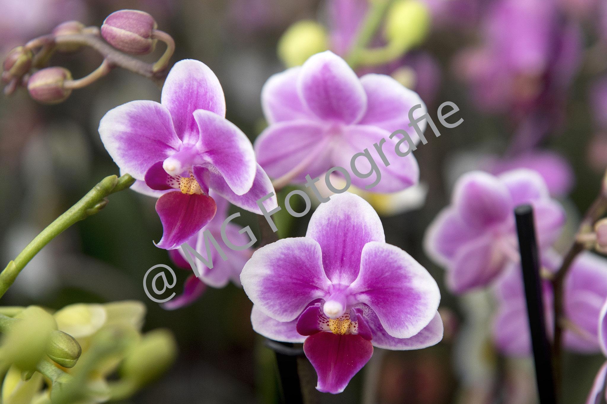 Bloemen013