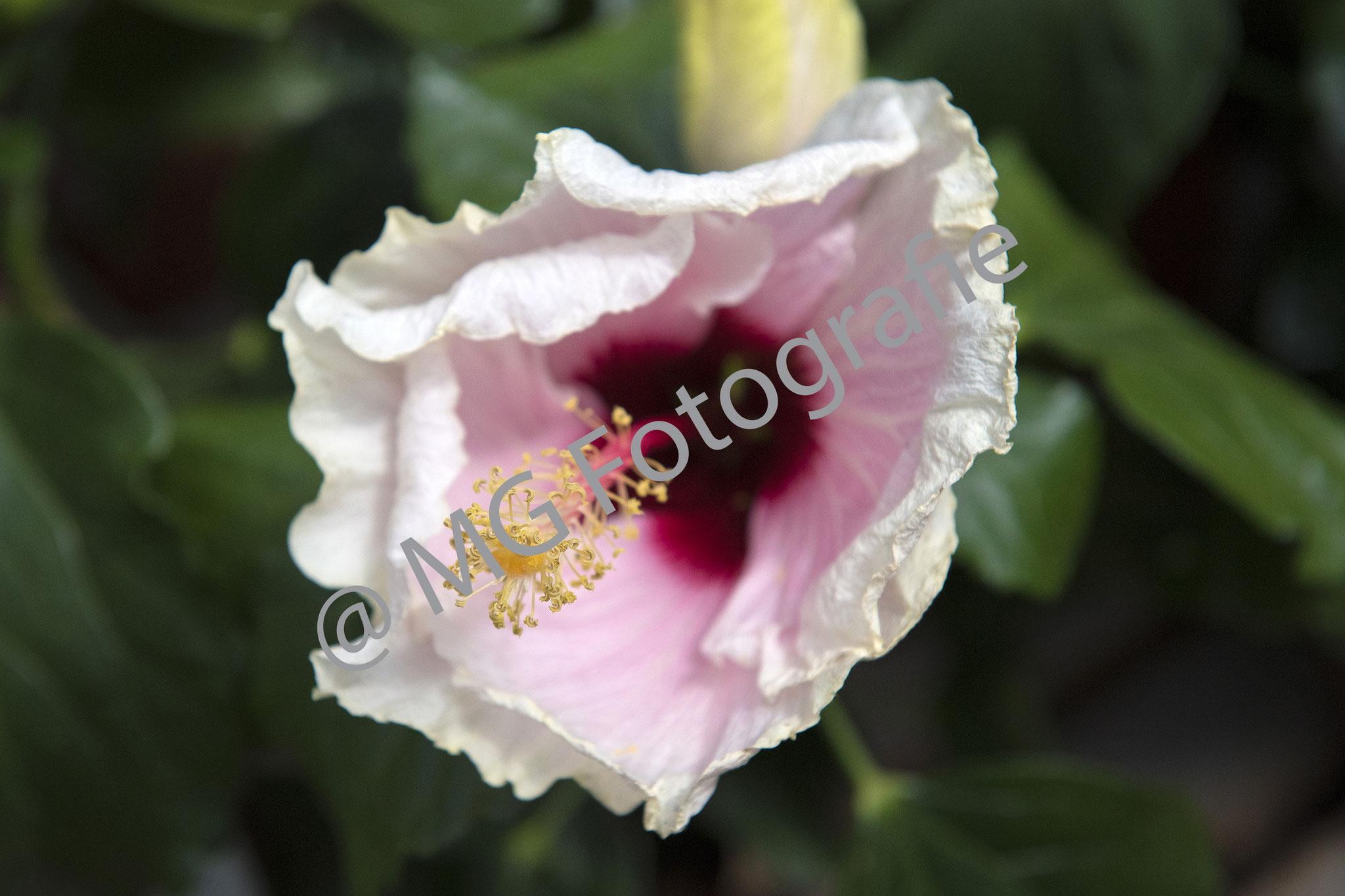 Bloemen012