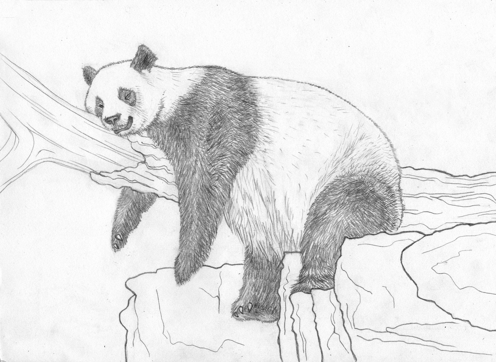 Dessins sur Feuille > Panda