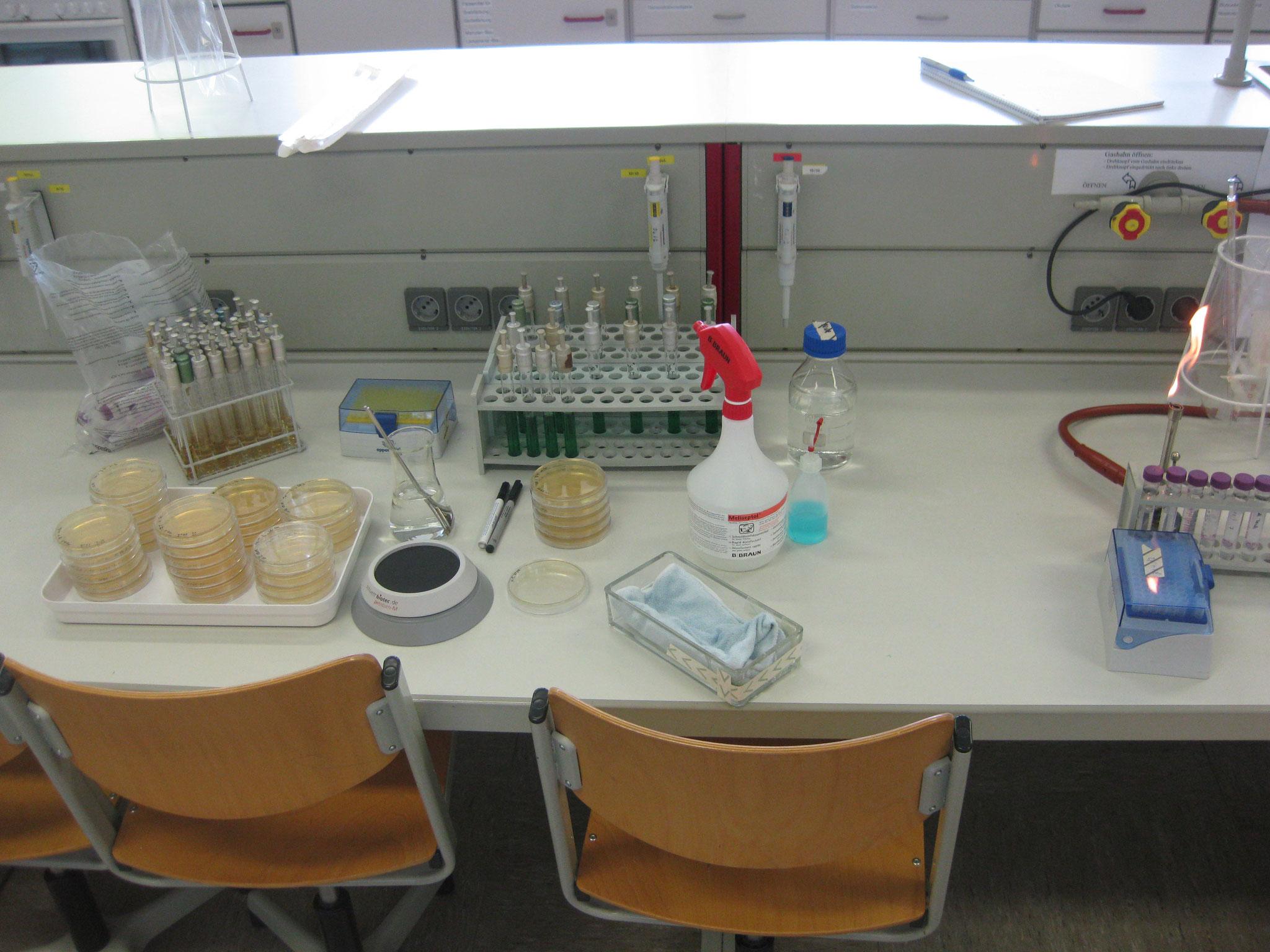 Mikrobiologische Wasser Analyse