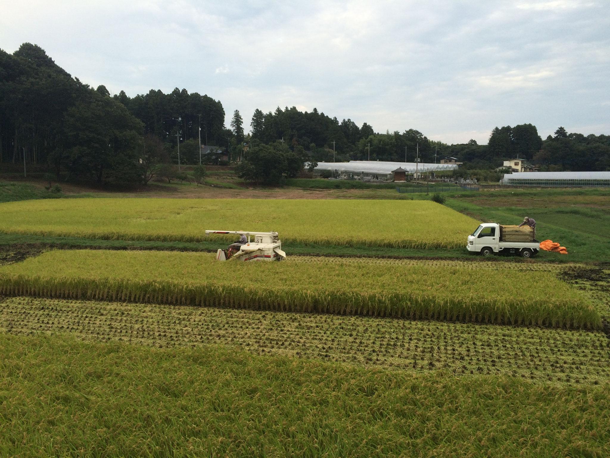 秋の新米収穫