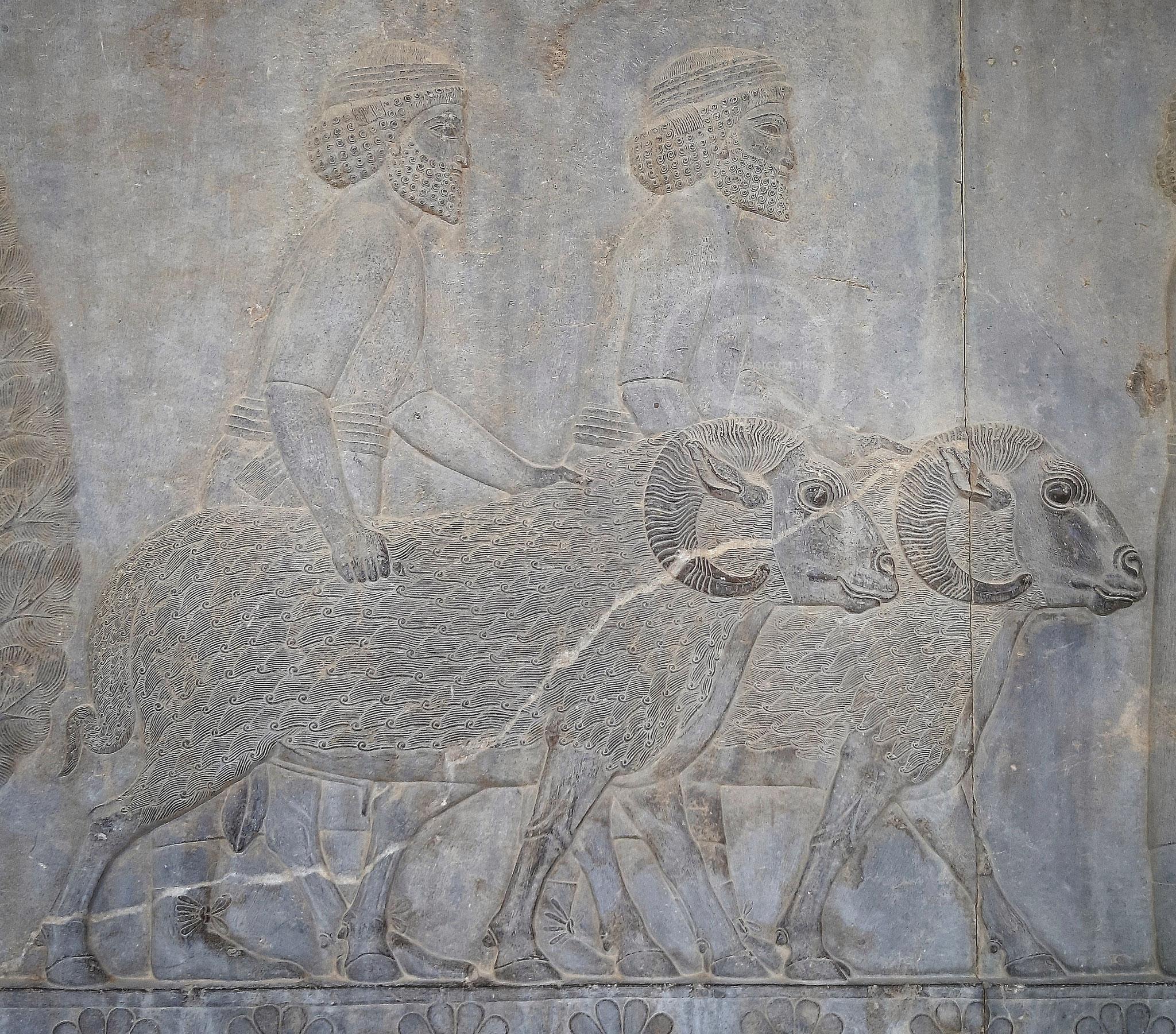 Vassalli Assiri che portano in dono due arieti, Palazzo Apadana - Persepoli (Iran)
