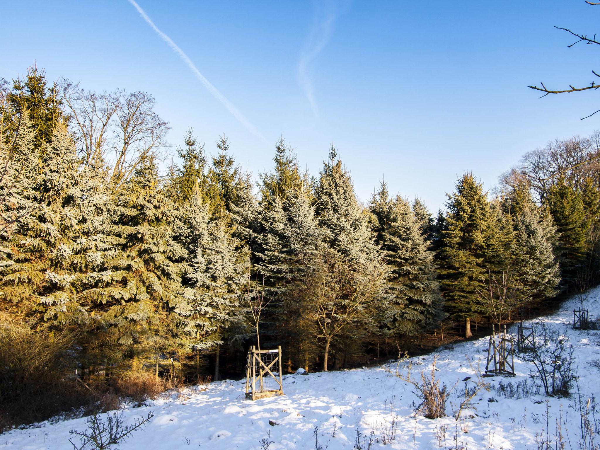 In diesem Januar zeigt sich die Streuobstwiese in weißer Pracht.