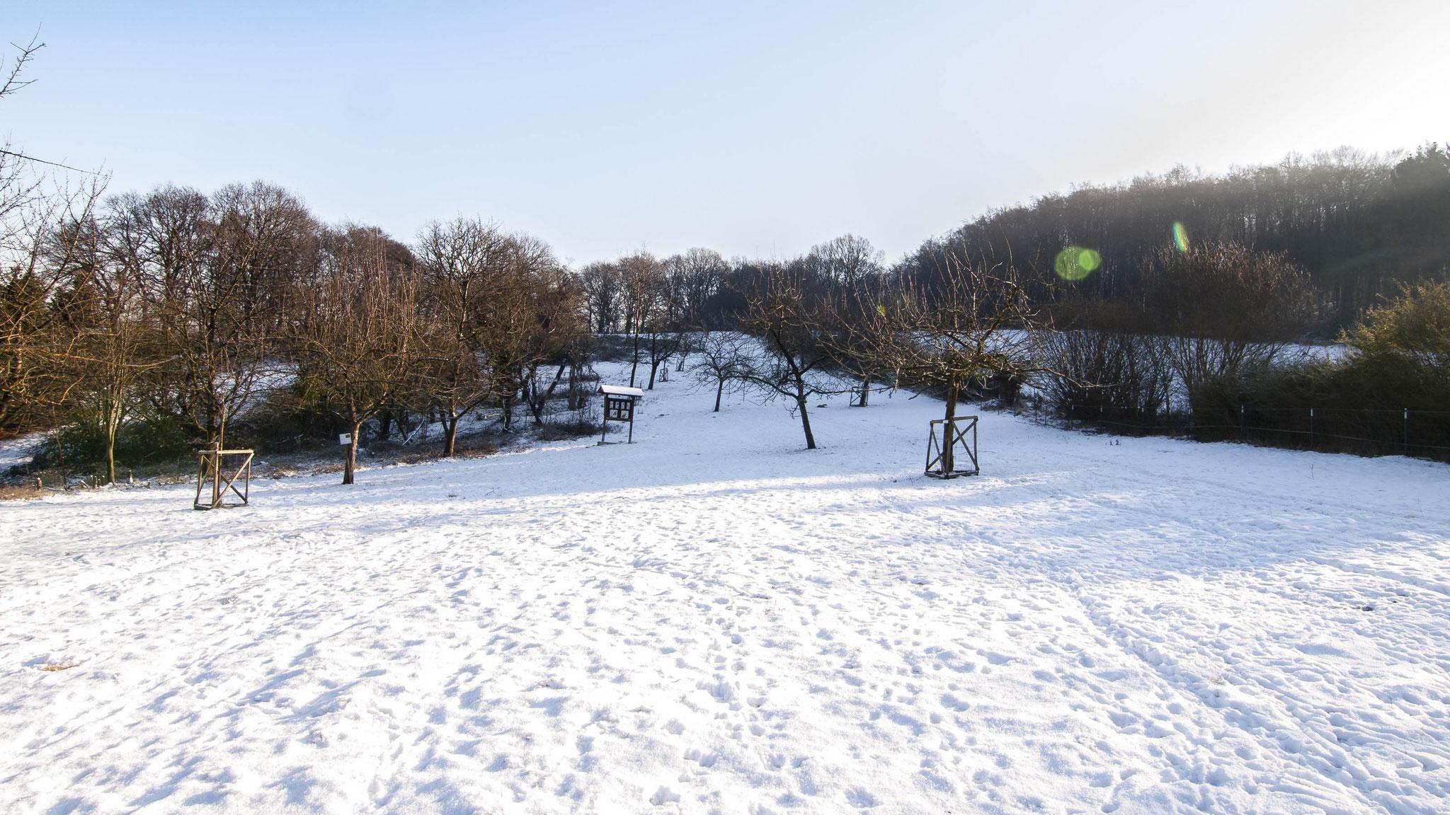 Ganz in weiß präsentiert sich die Streuobstwiese Hohenrode.