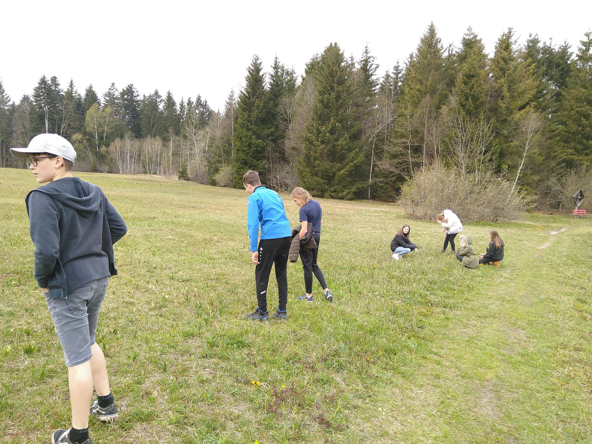 Auf der Suche nach Droseracaea