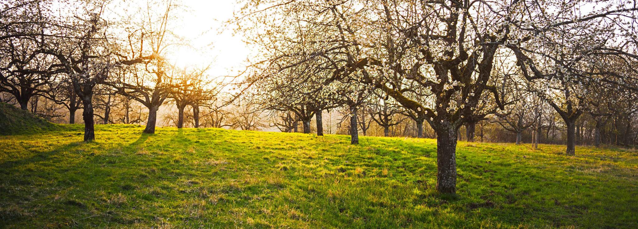 Kirschblüte Schorndorf