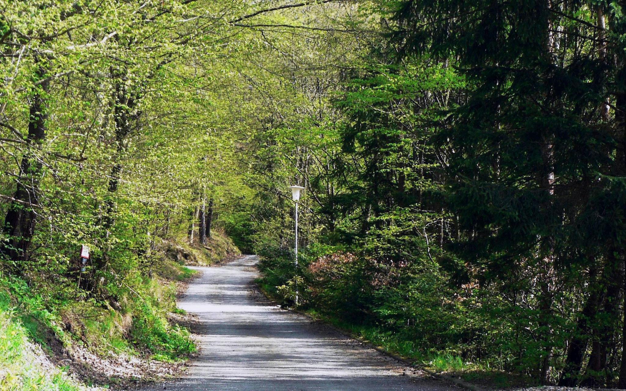 Waldweg als Fortsetzung der Sonnenstraße