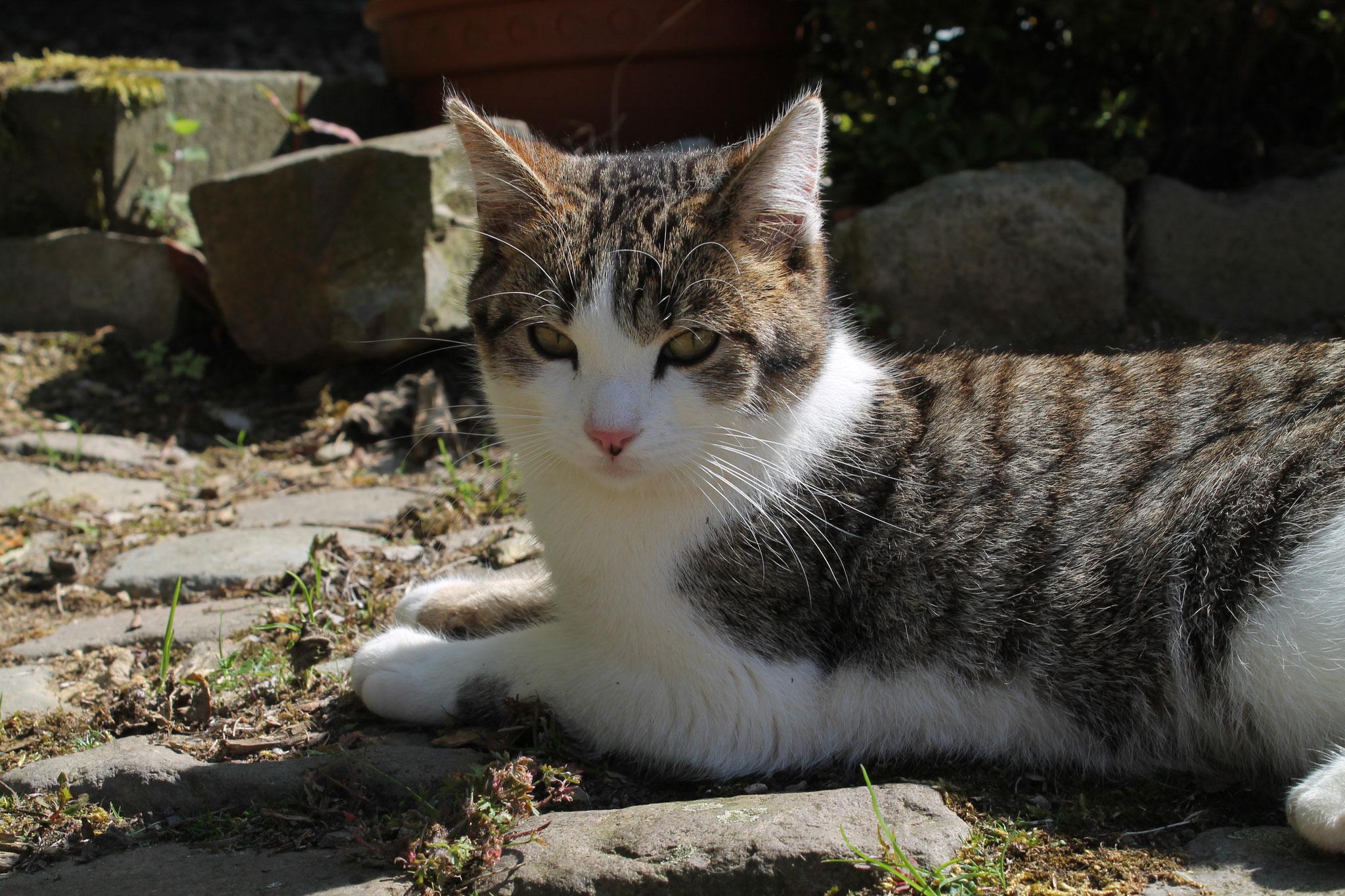 Katze carly
