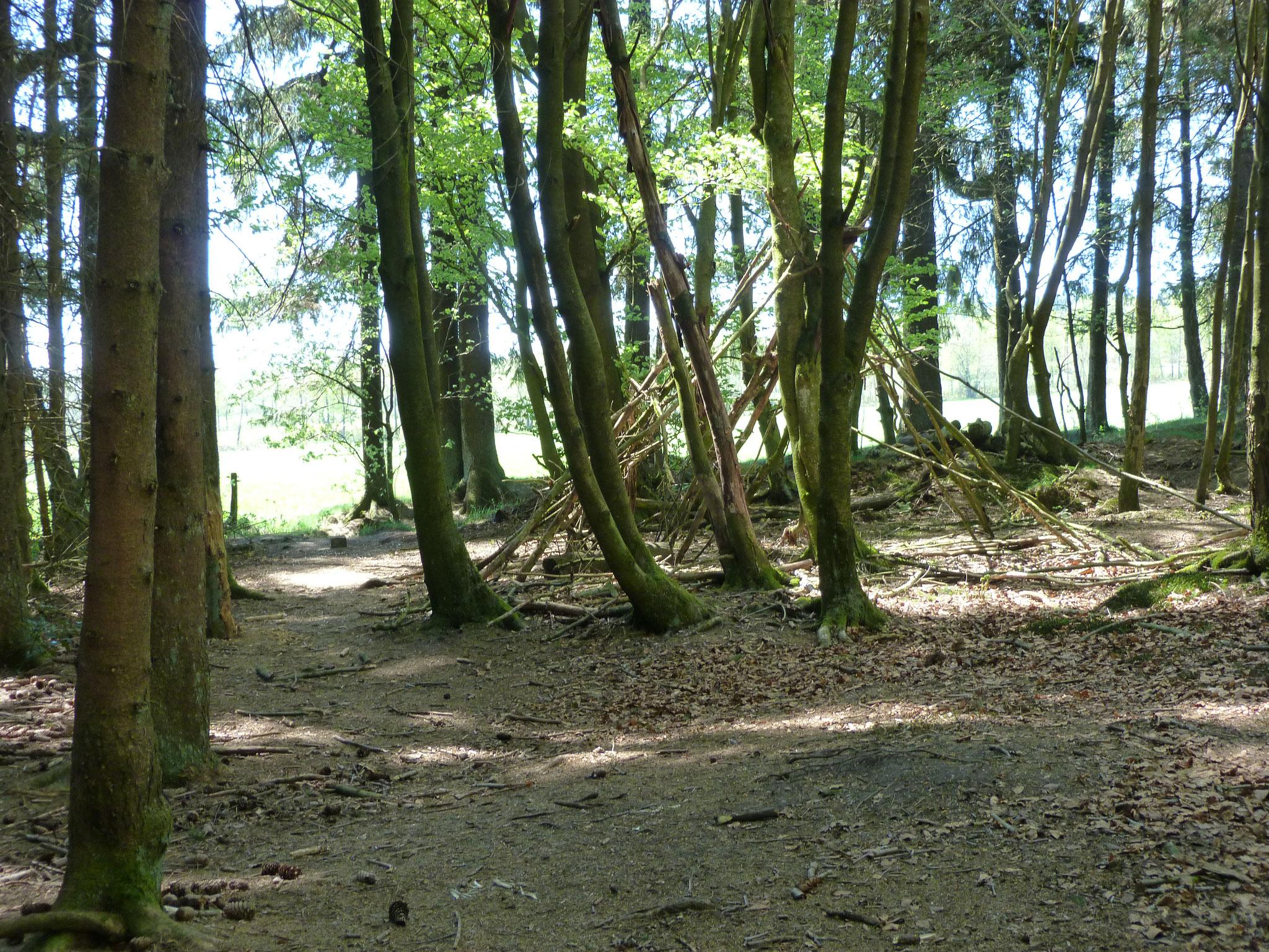 Abenteuer Wald