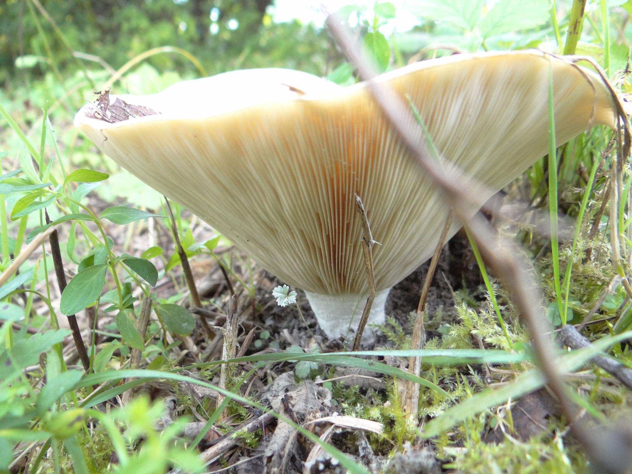 Aber auch unbewegliche Naturmotive wie dieser Pilz waren beliebt