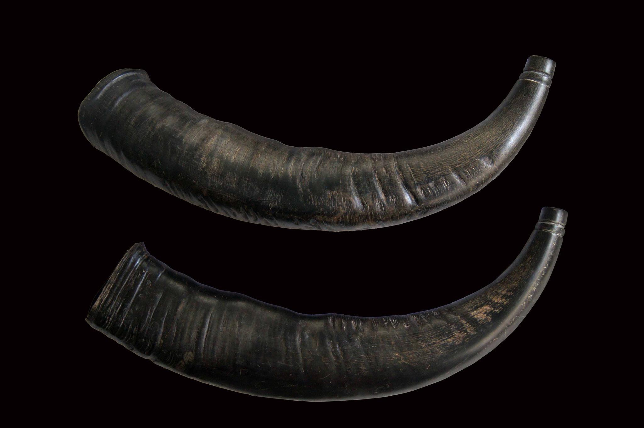 Pair of simple buffalo horns.