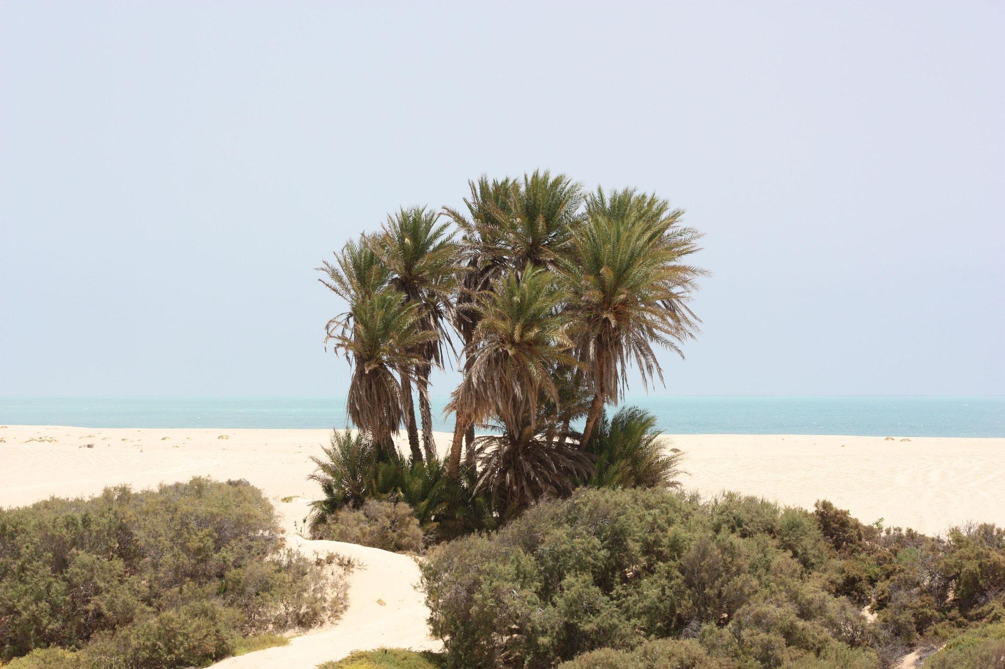 ein paar Palmen im nirgendwo