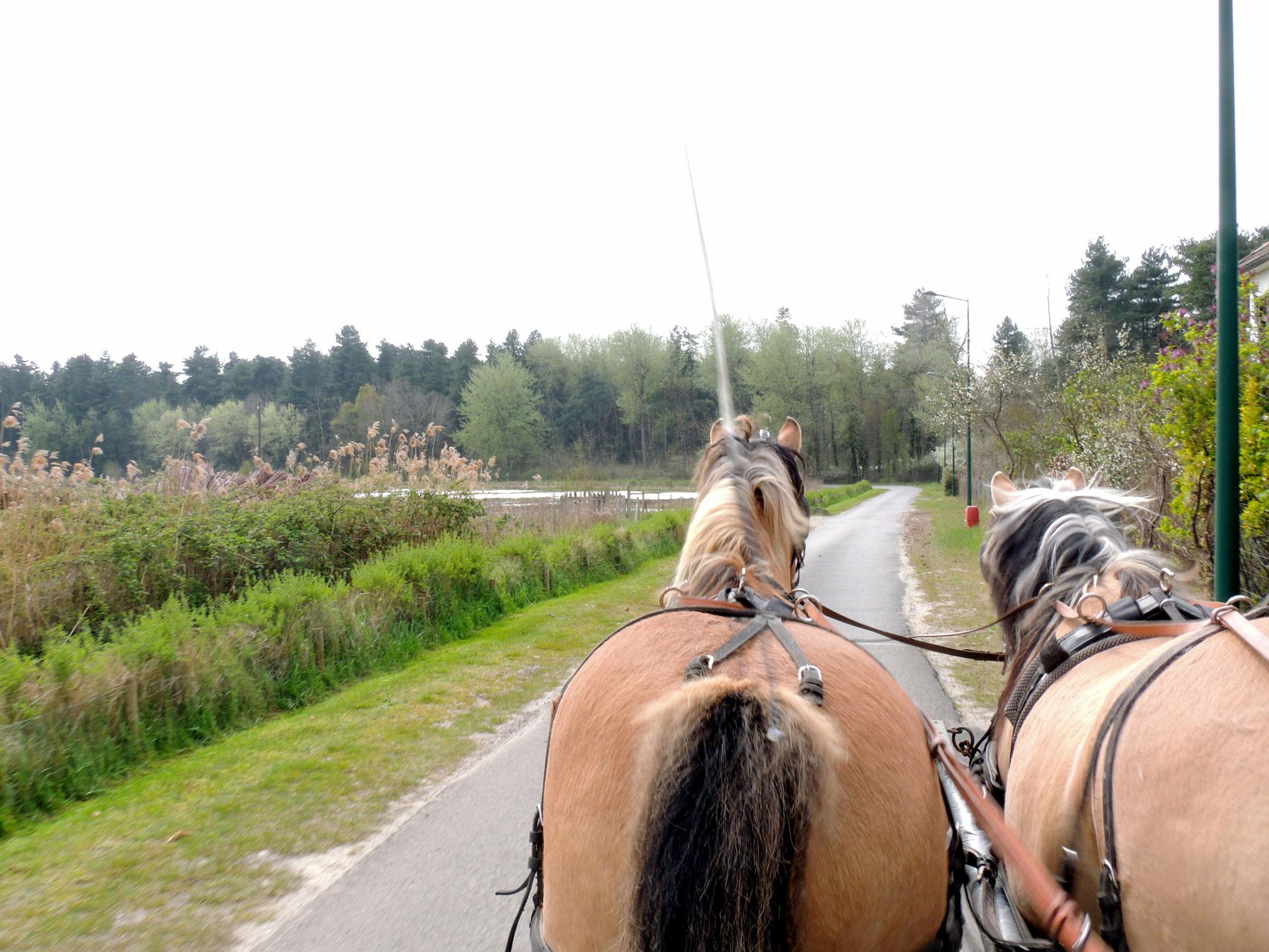 Départ pour la balade en calèche : direction Baie de Somme