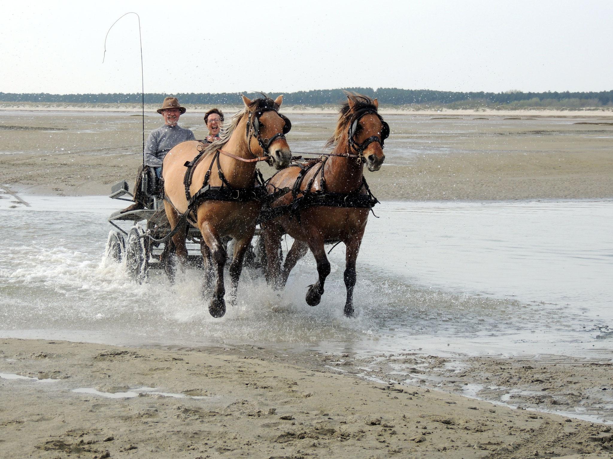 Les chevaux adorent...