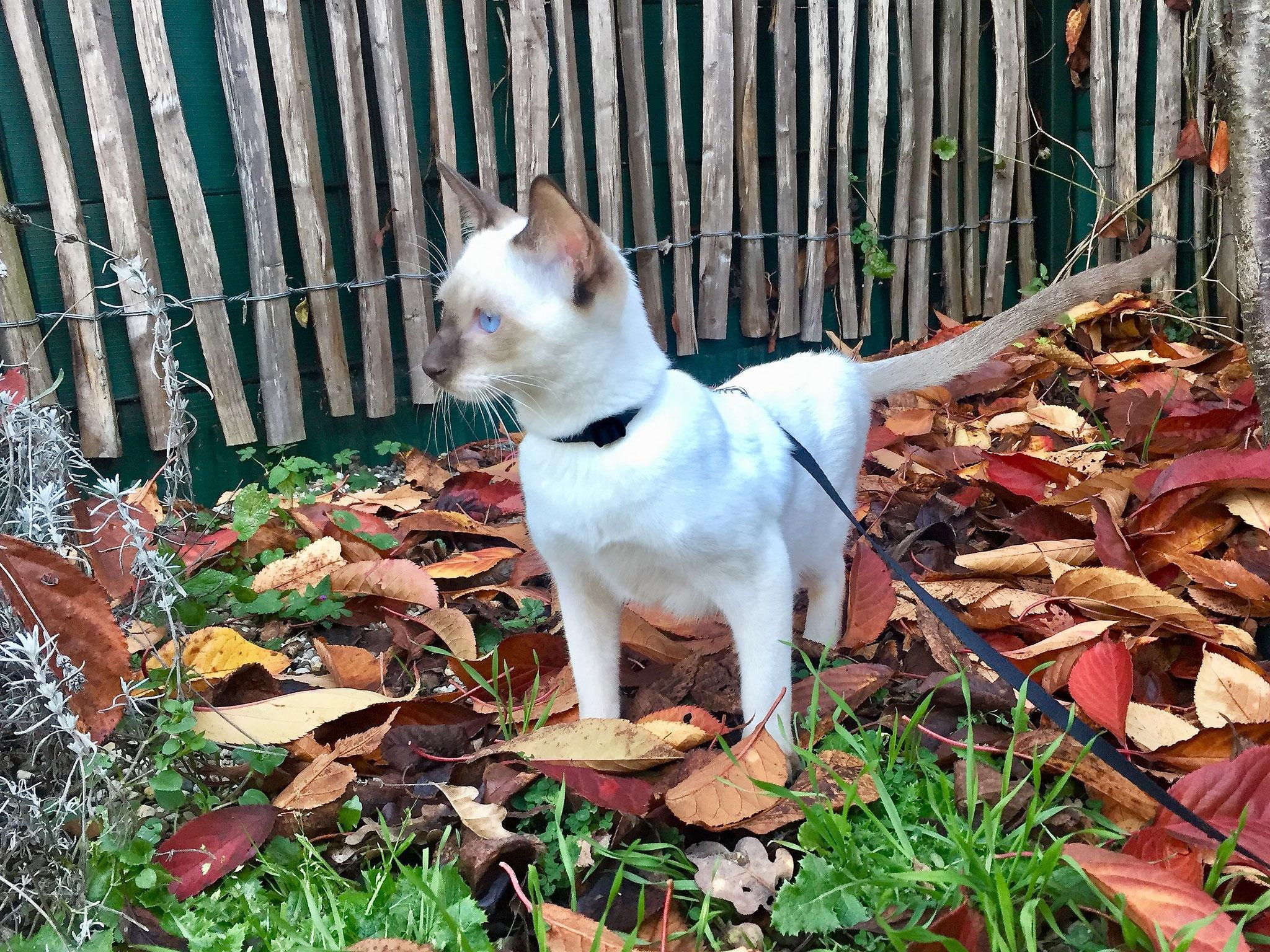 Jamila bei ihrem ersten Ausflug im Herbst 2020