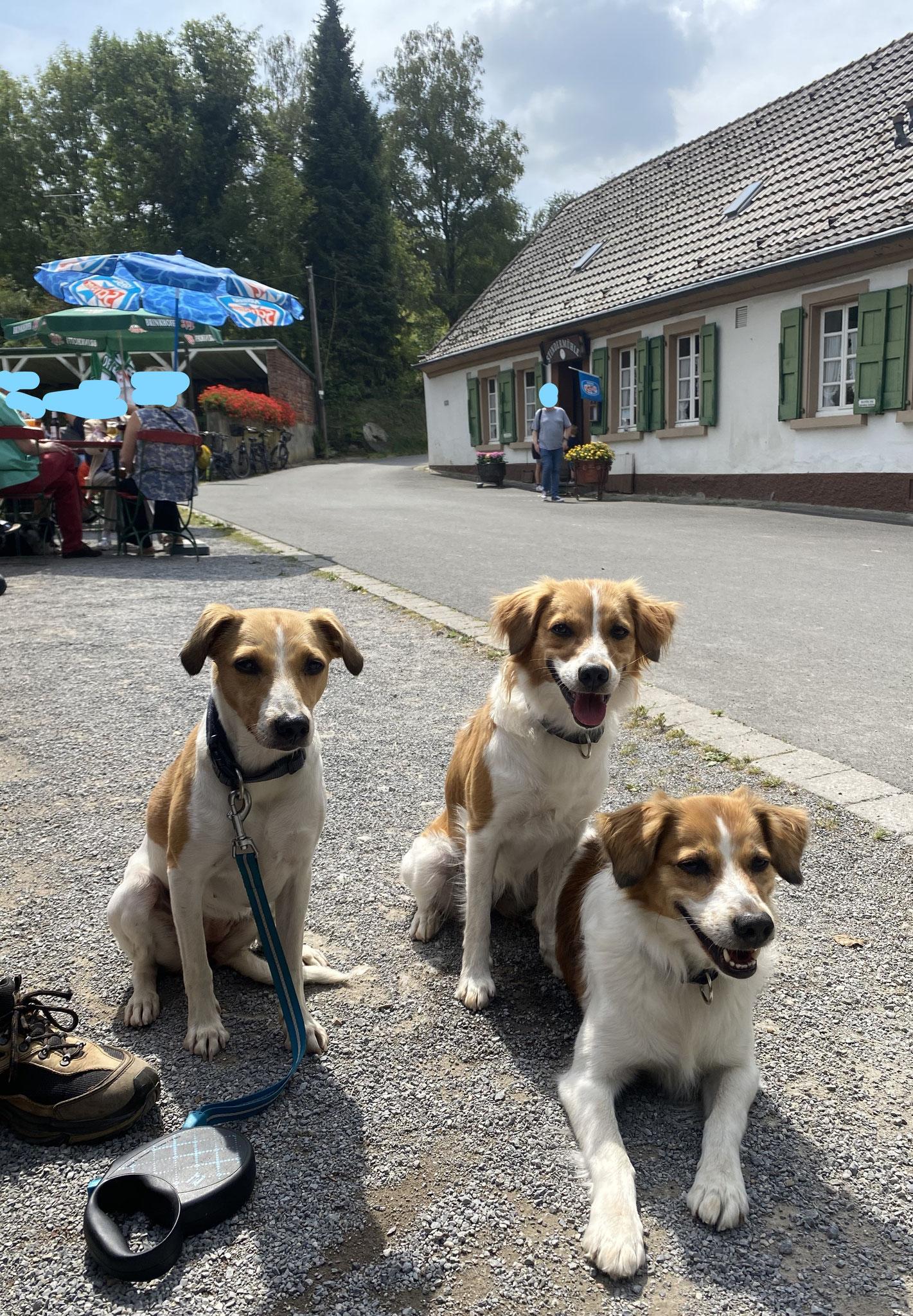 Amely, Bea und Beetje im Stindertal / Stindermühle