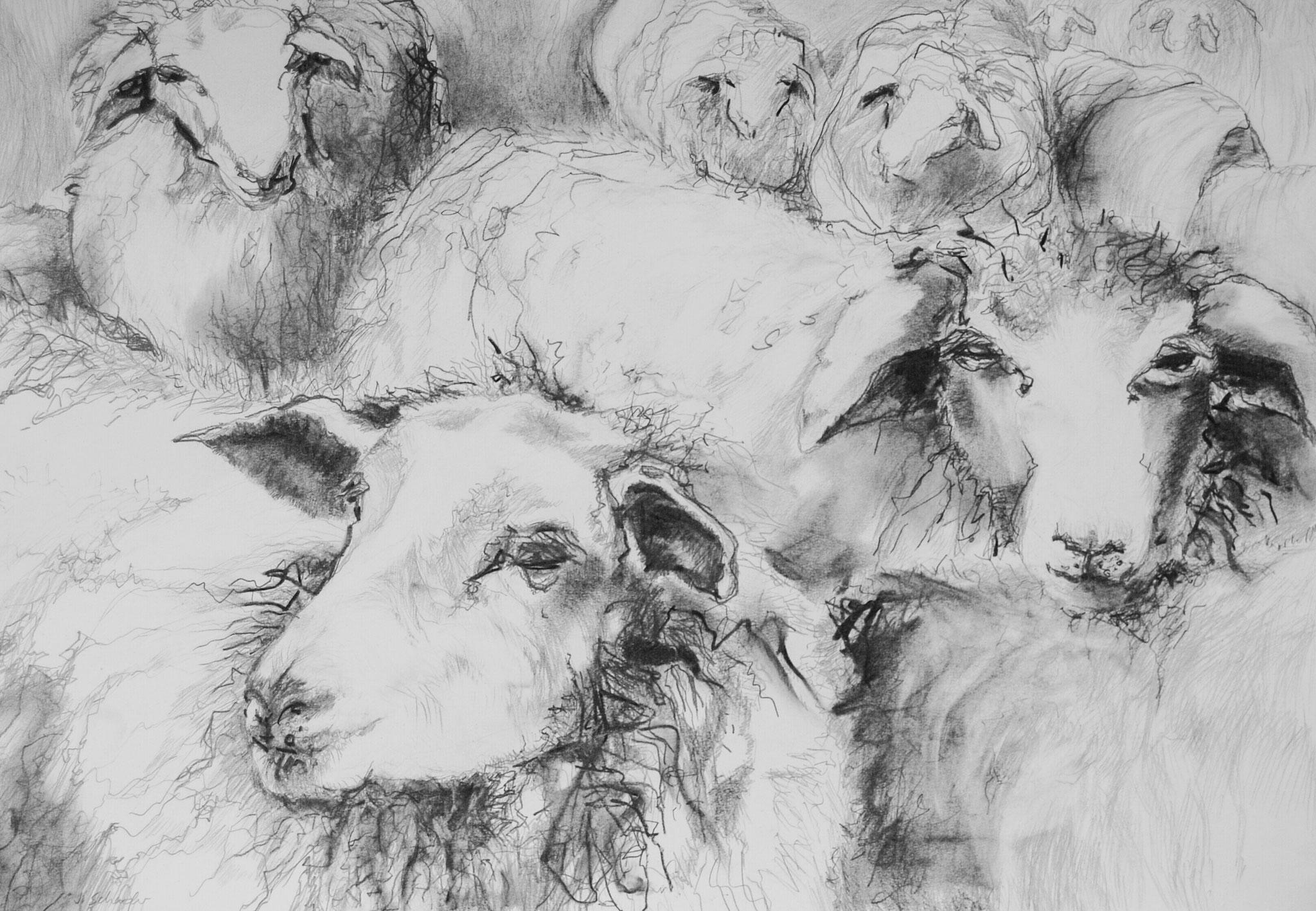 Schafe, 2014, Bleistift auf Papier, 42 x 49 cm