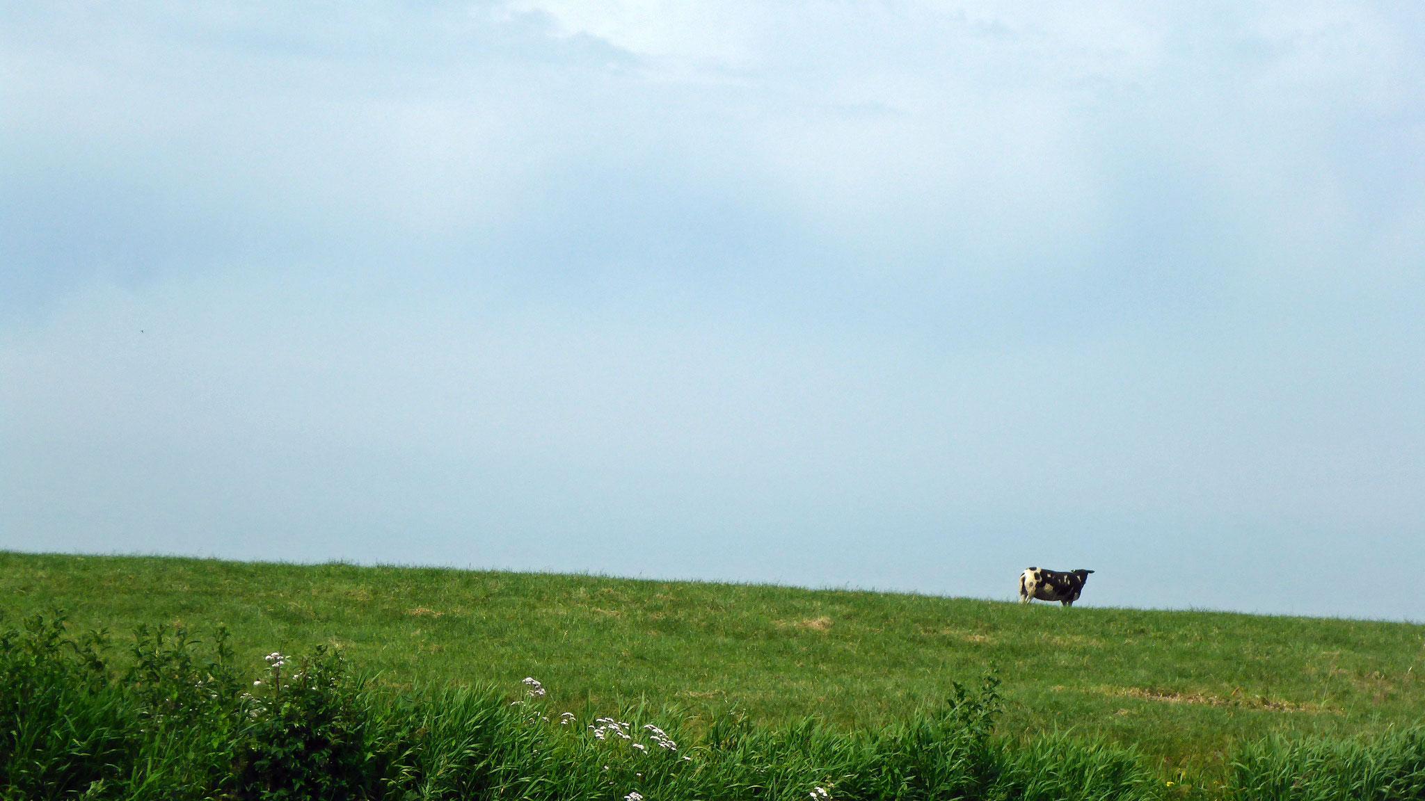 Landschaft mit Schaf.