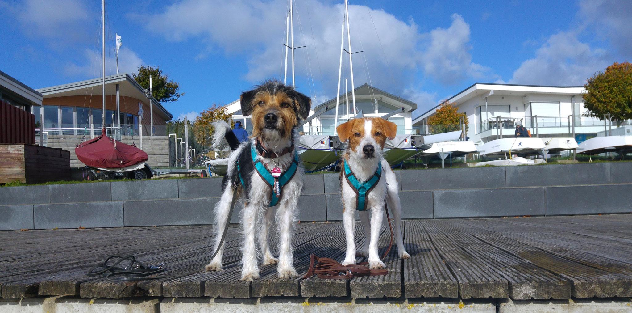 Digga und Bardur hat es am Yachthafen gefallen;-)